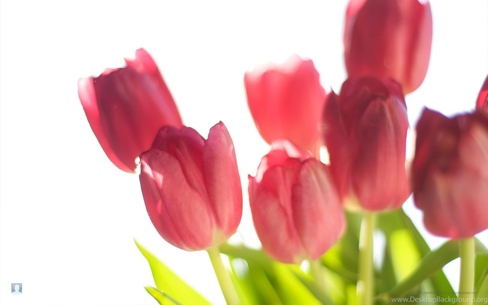 Free Spring Flowers Backgrounds Hd Wallpapers Desktop Background
