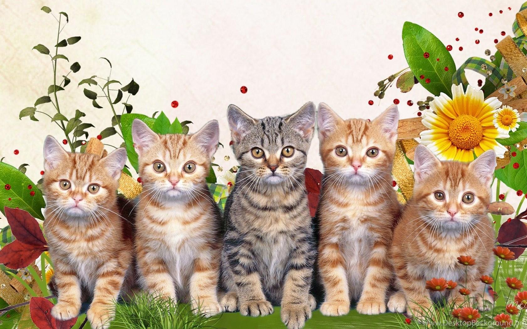 Большие открытки с котами, надписью семейка аддамс