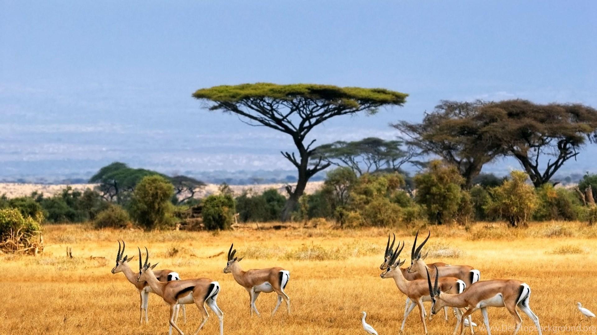 African Landscape Of African Animals Wallpapers Download Desktop ...