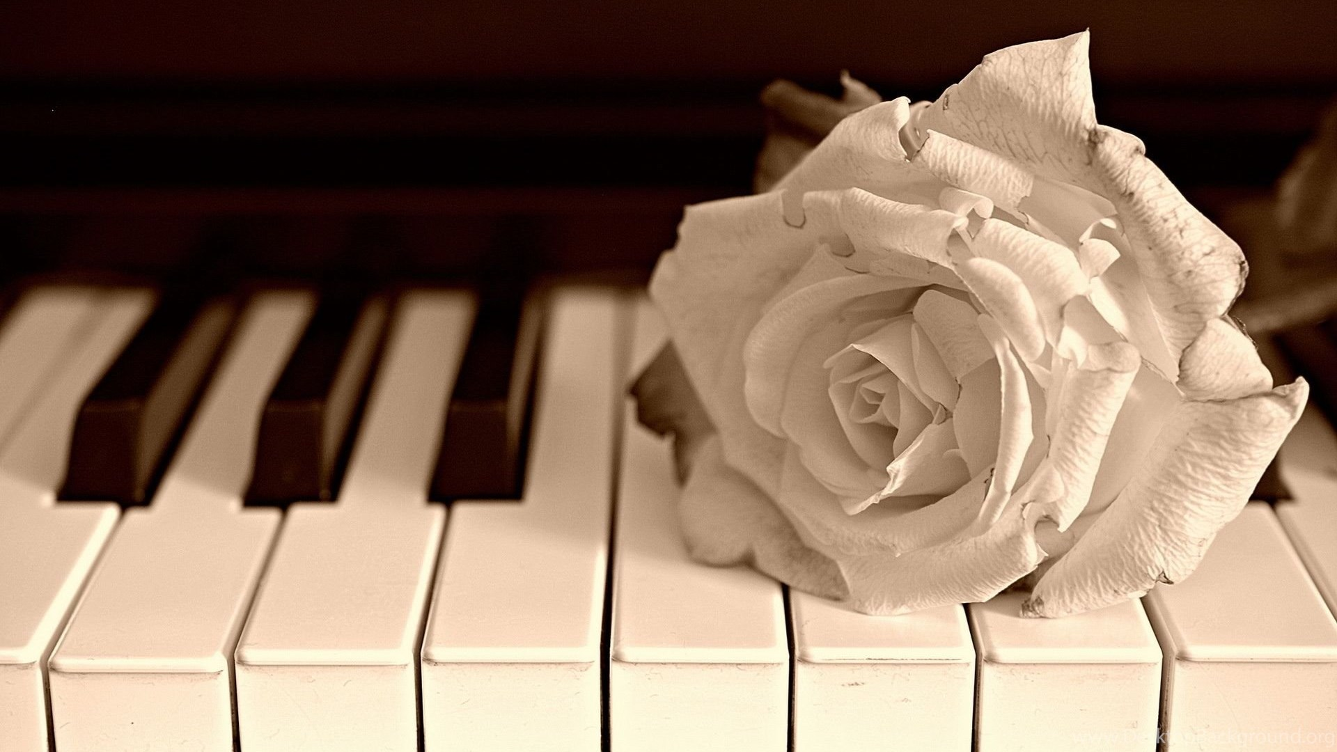 Download Piano Wallpapers Hd 2454 1920x1200 Px High Resolution Desktop Background