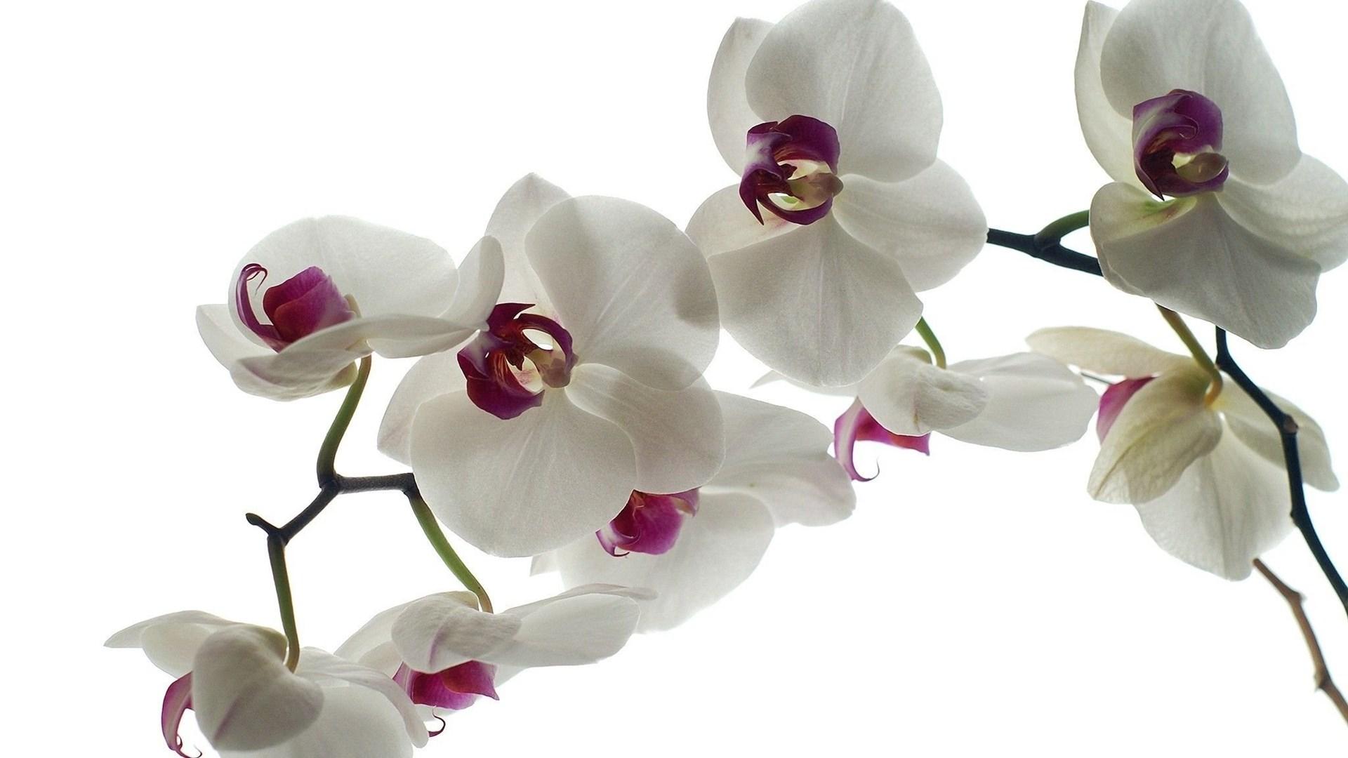 Картинки с орхидеями на рабочий стол