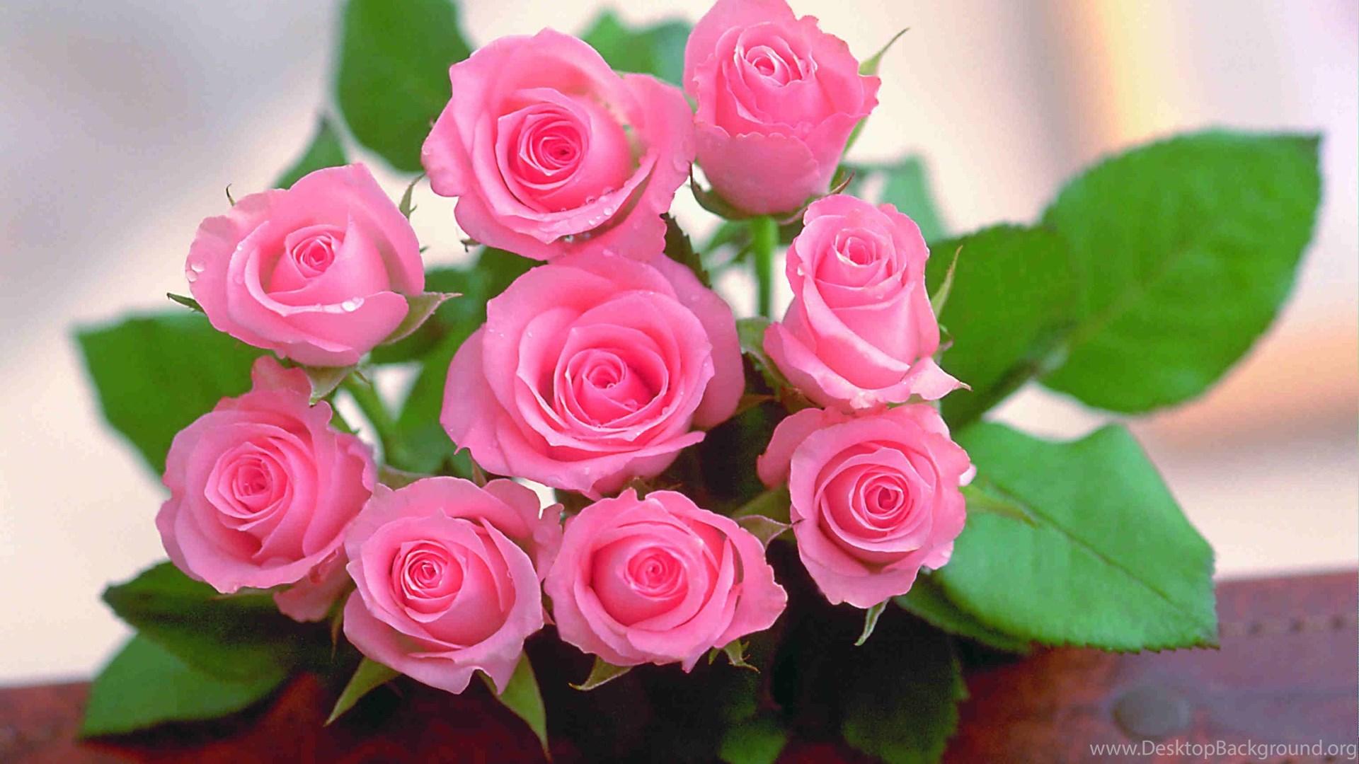 Download beautiful flowers hd wallpapers 1080p wallmanage popular izmirmasajfo