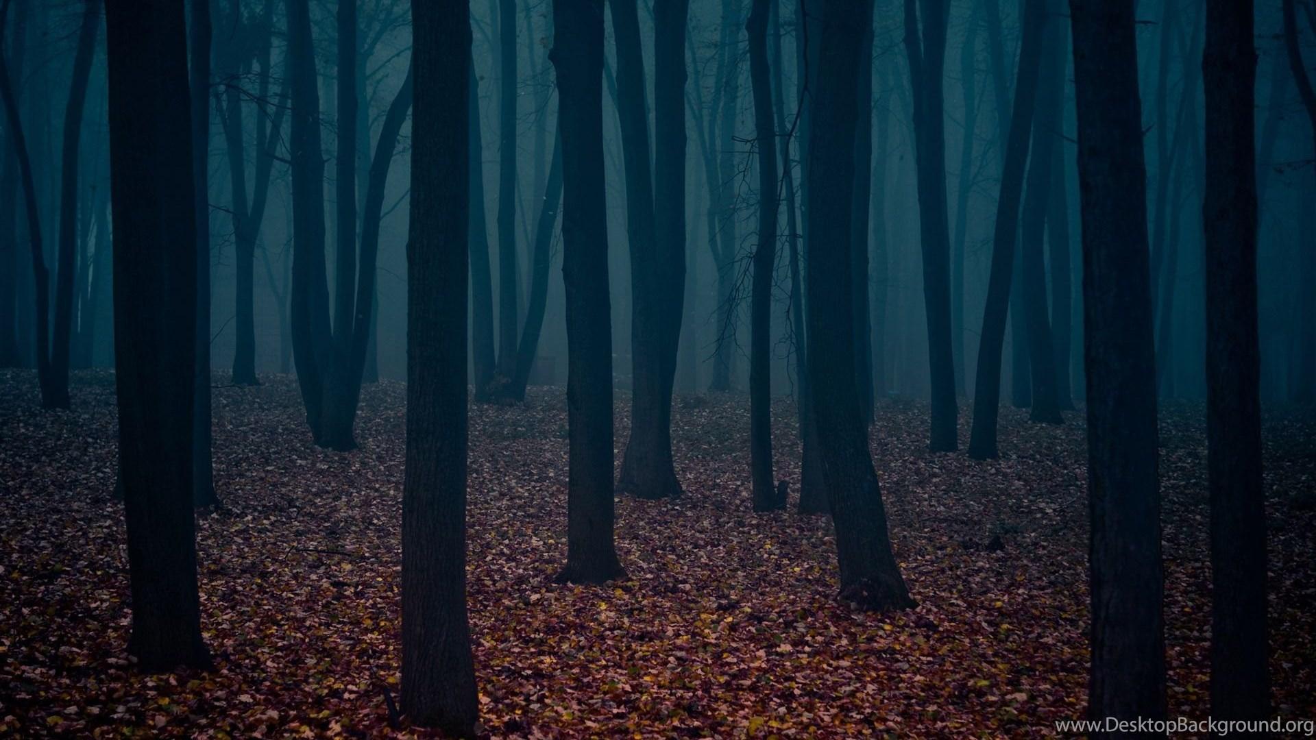 Dark Forest HD Wallpapers, Dark Forest Backgrounds Desktop ... Dark Forest Wallpapers Widescreen