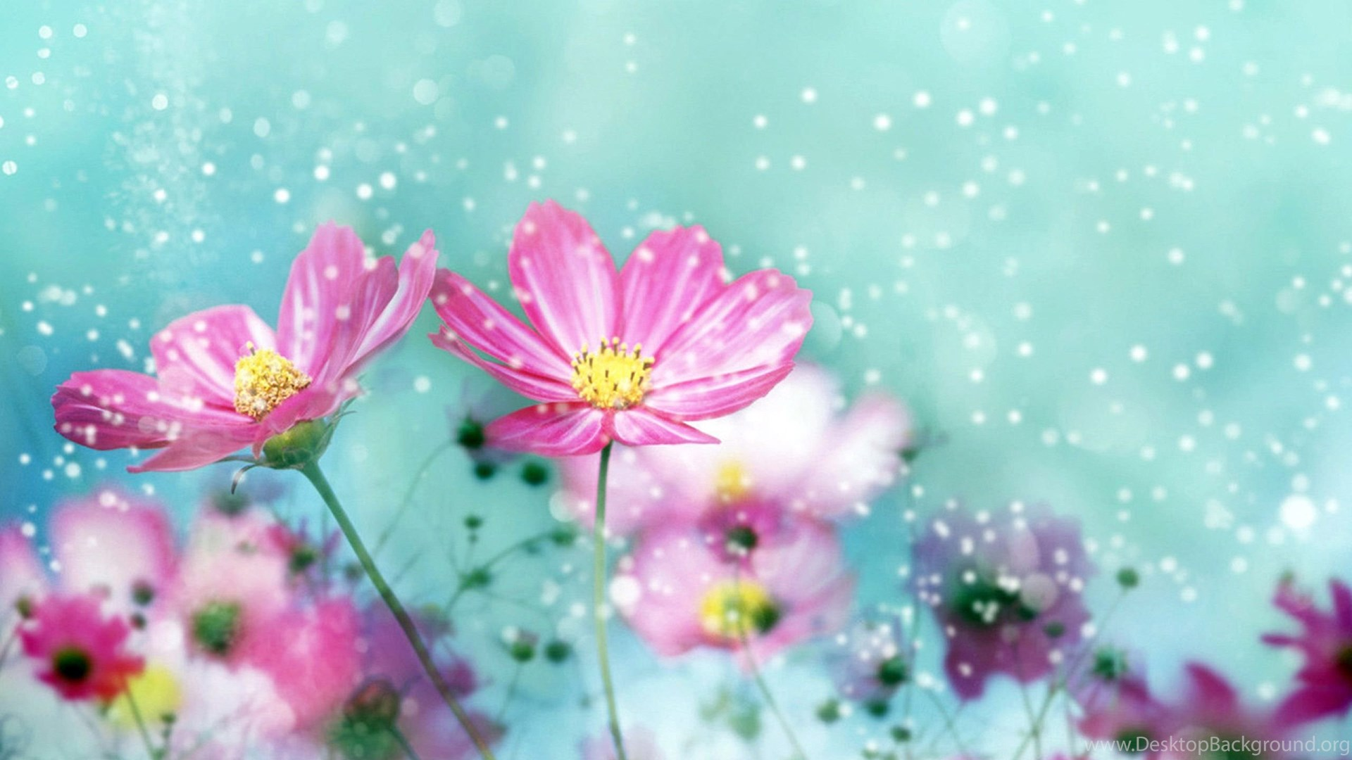 Pretty flower backgrounds hd wallpapers desktop wallpapers popular mightylinksfo