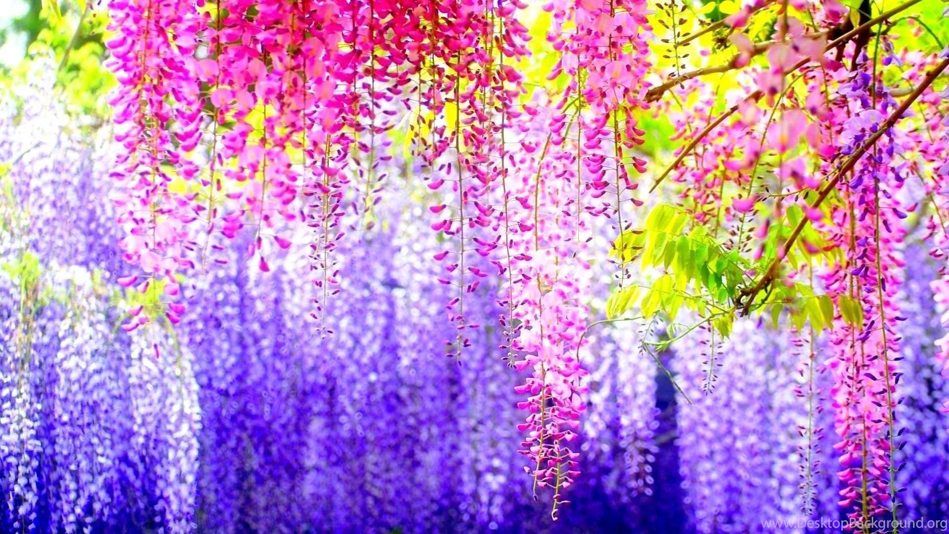 Pretty Flower Backgrounds Hd Wallpapers Desktop Wallpapers