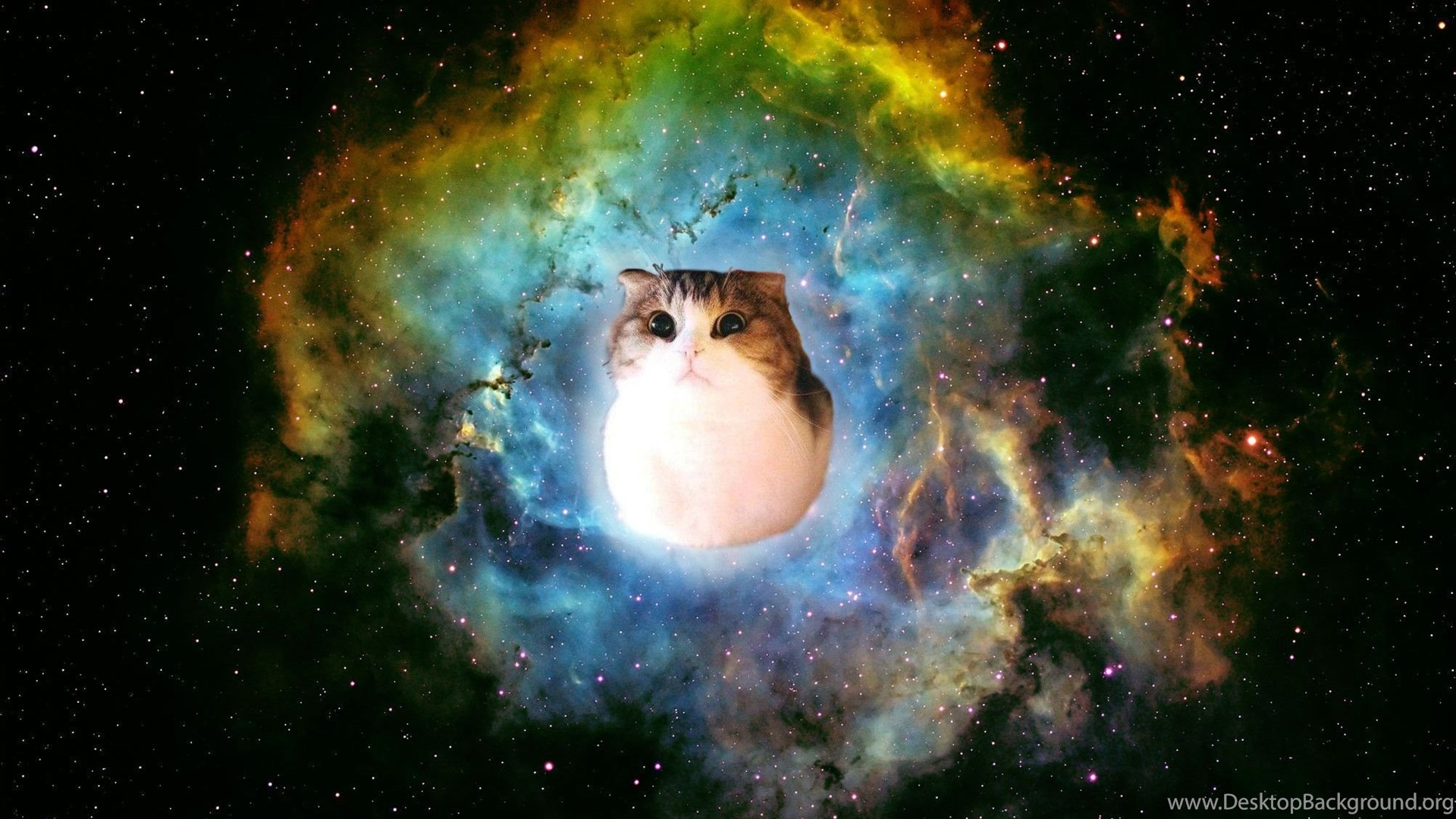 Buy Space in Cats wallpaper ipad pictures picture trends