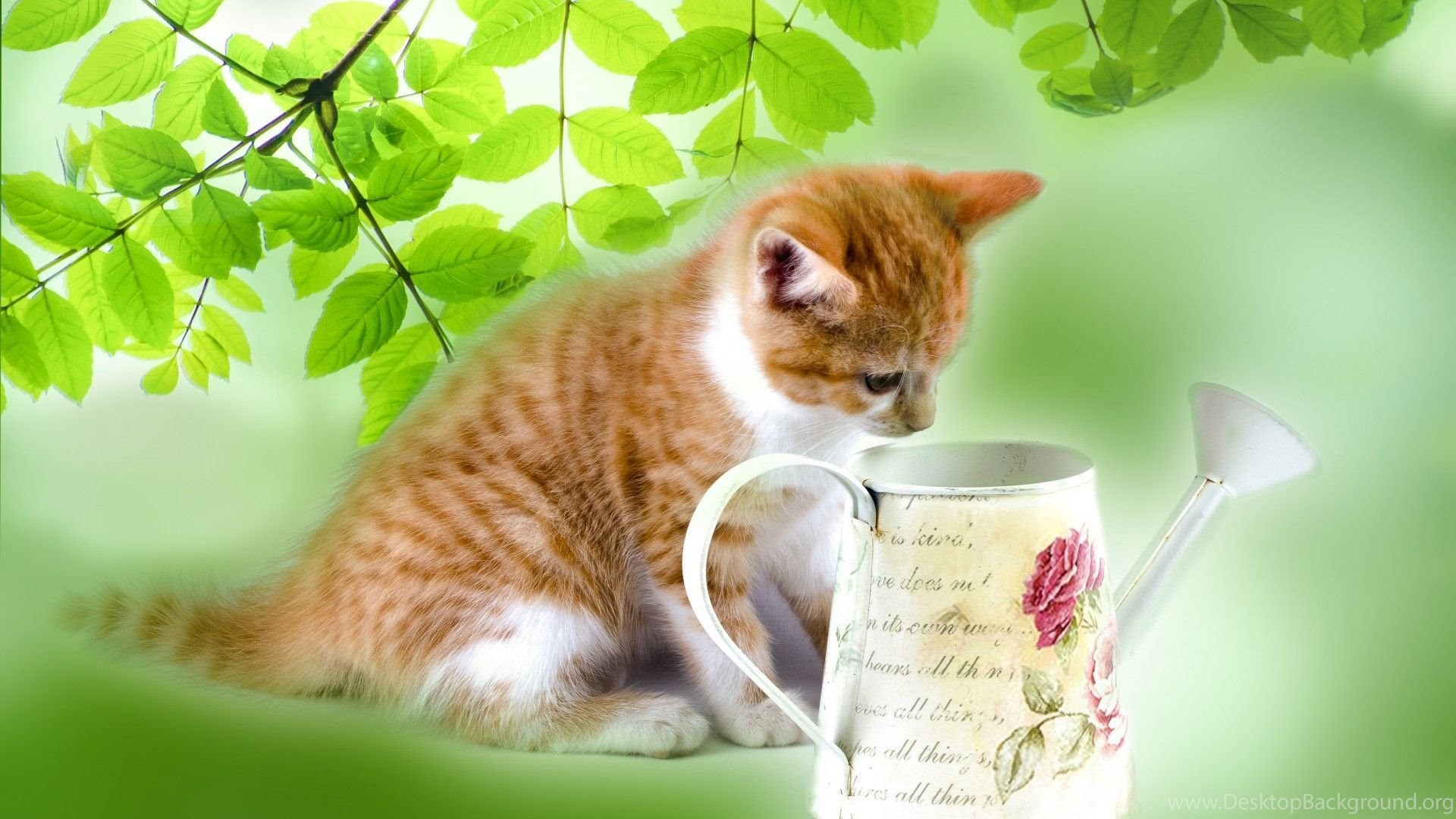 Cats kitten watering animals cute cats cans kittens wallpapers popular altavistaventures Images