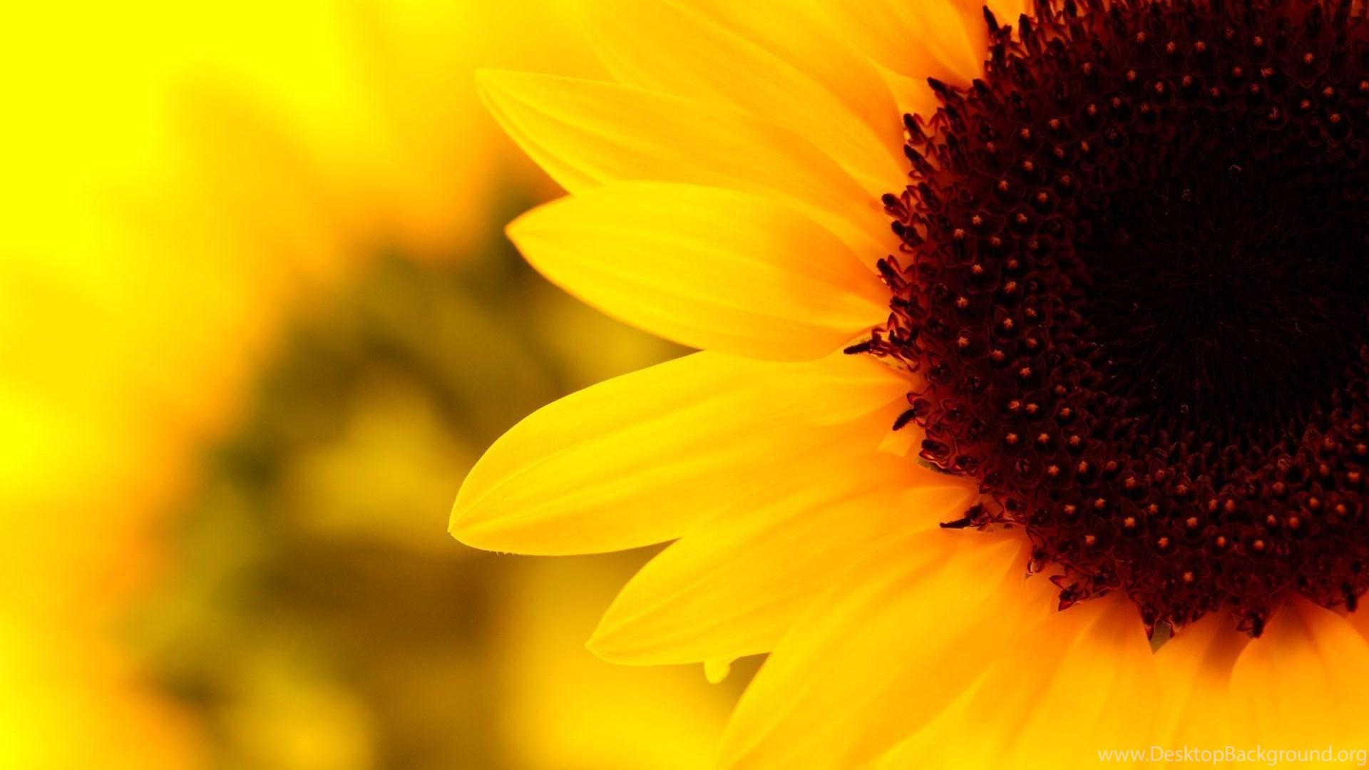 21605) Sunflower Tumblr Desktop Wallpapers WalOps.com ...