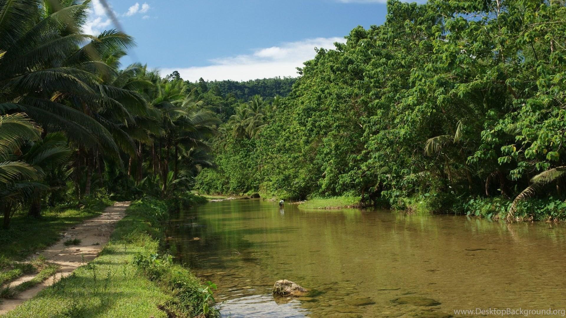 Jungle River HD Wallpapers Desktop Background