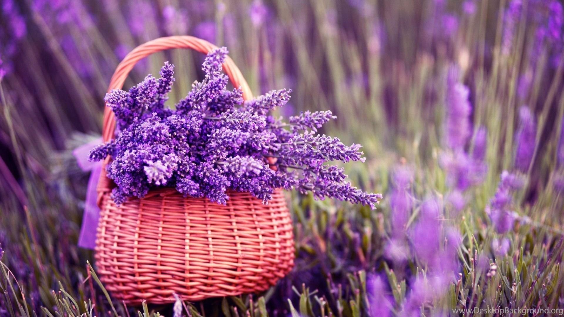 Purple lavender flower in basket wallpapers hd for desktop desktop background - Lavender purple wallpaper ...