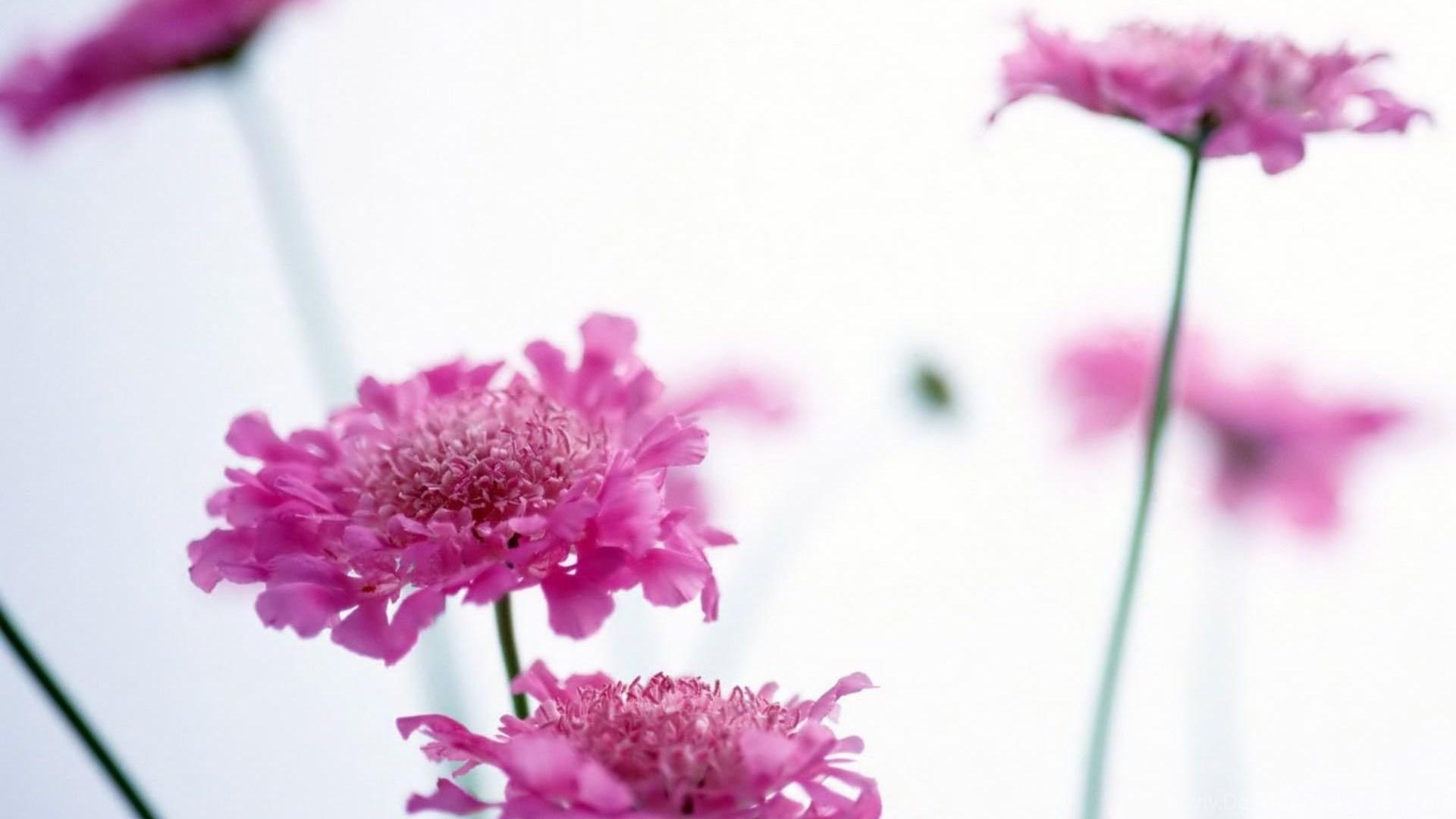Floral Desktop Wallpapers Hd Wallpapers And Pictures Desktop