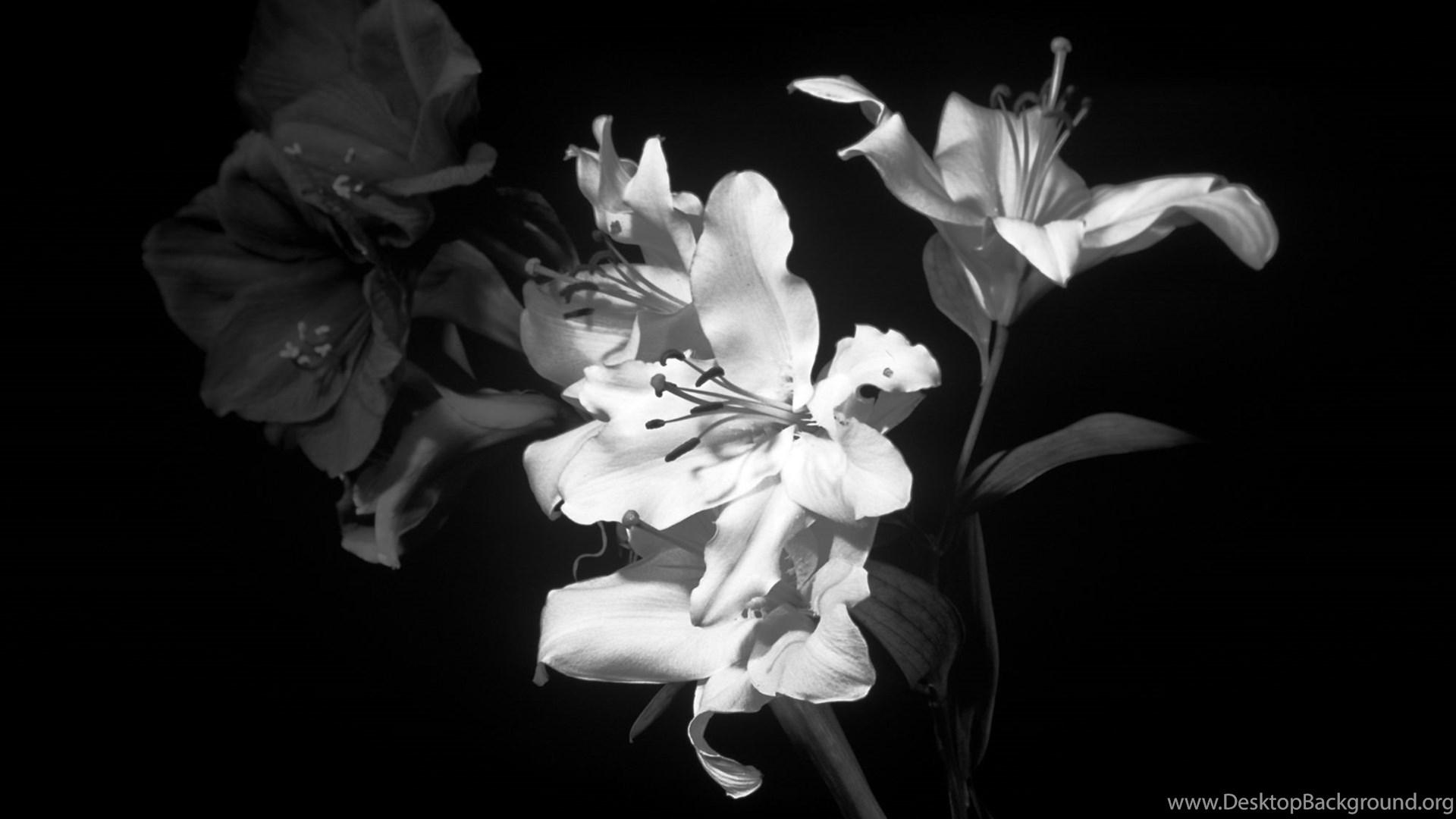 Black White Flowers Wallpapers Desktop Background
