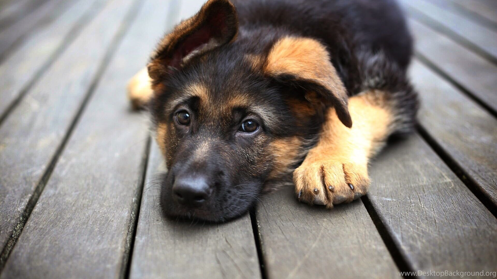 Cool Animals, Animal Background Images, Hd Dog Images, Download ...