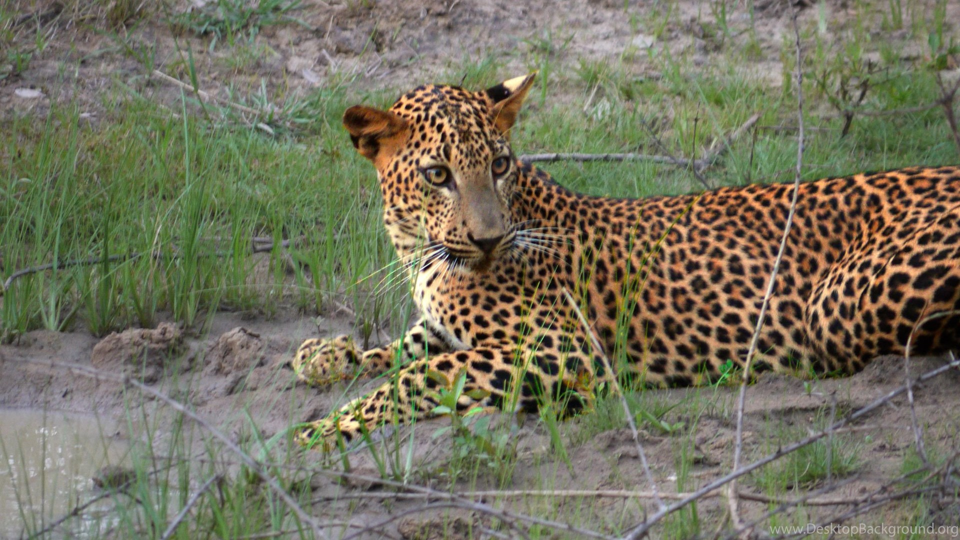 Cool Pets, Free Wallpapers, Animal World, Wild Animals, Wallpapers ...