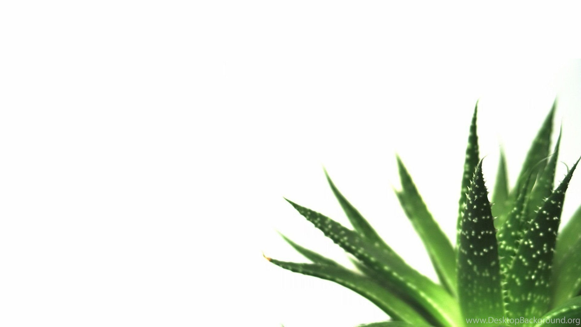 Nature Minimalistic Plants Macro Simple White Backgrounds ...