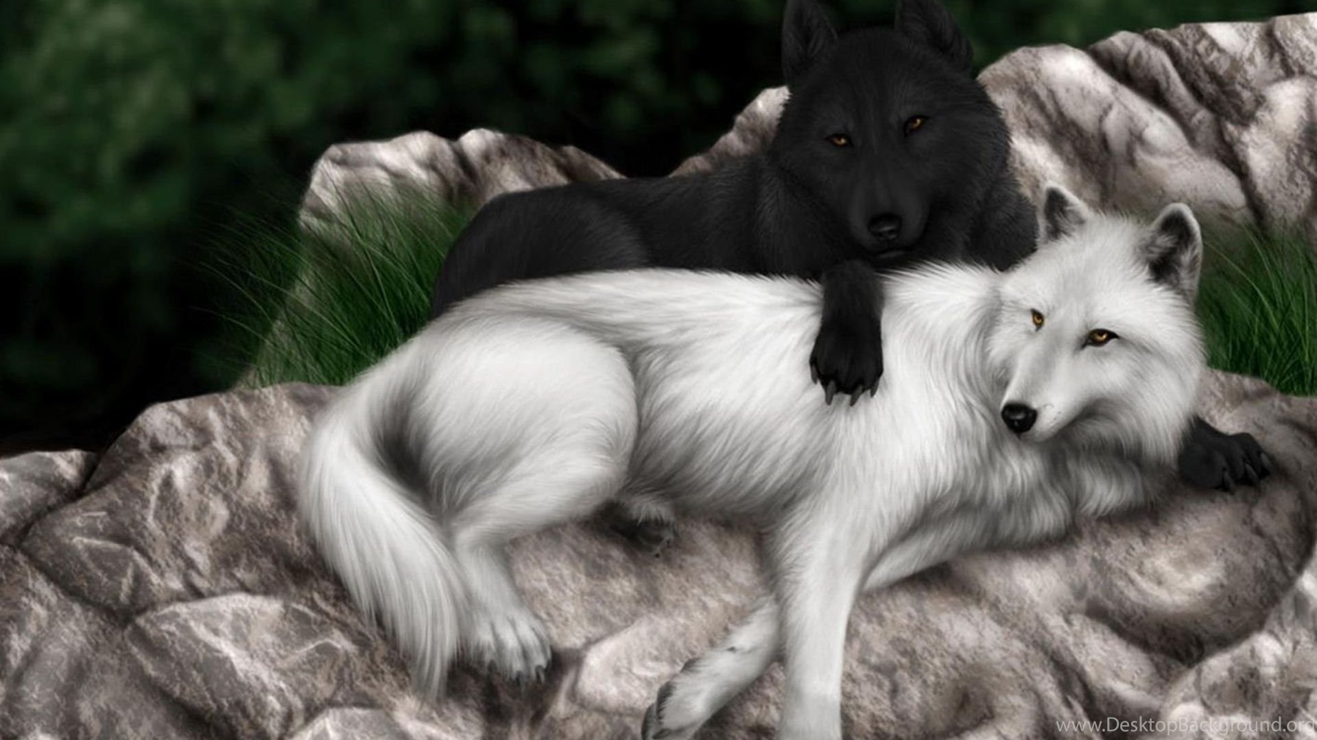 Black And White Wolf Wallpapers 717416 Desktop Background