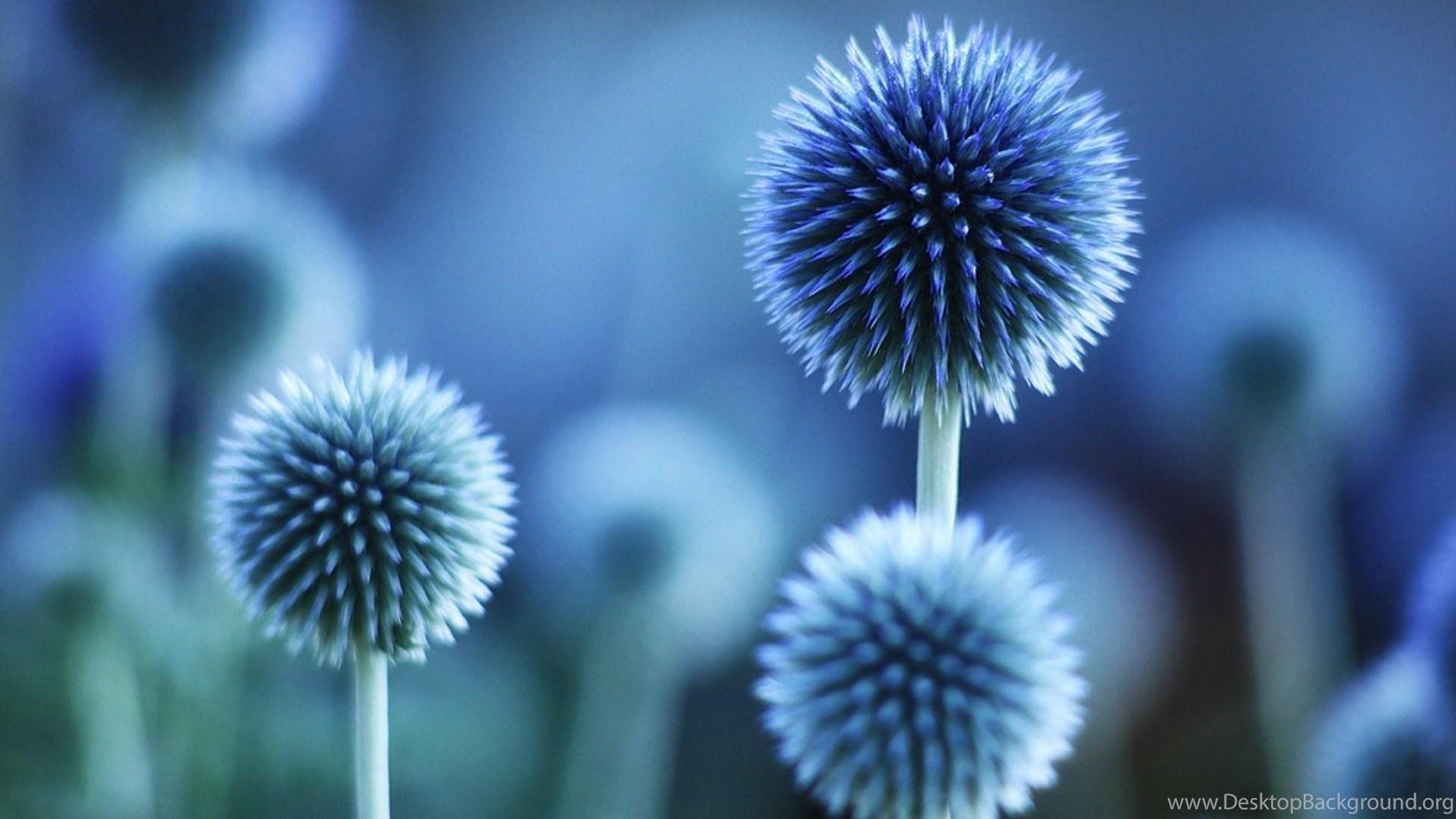 Beautiful Blue Flower Hd Wallpaper Get It Now Desktop Background