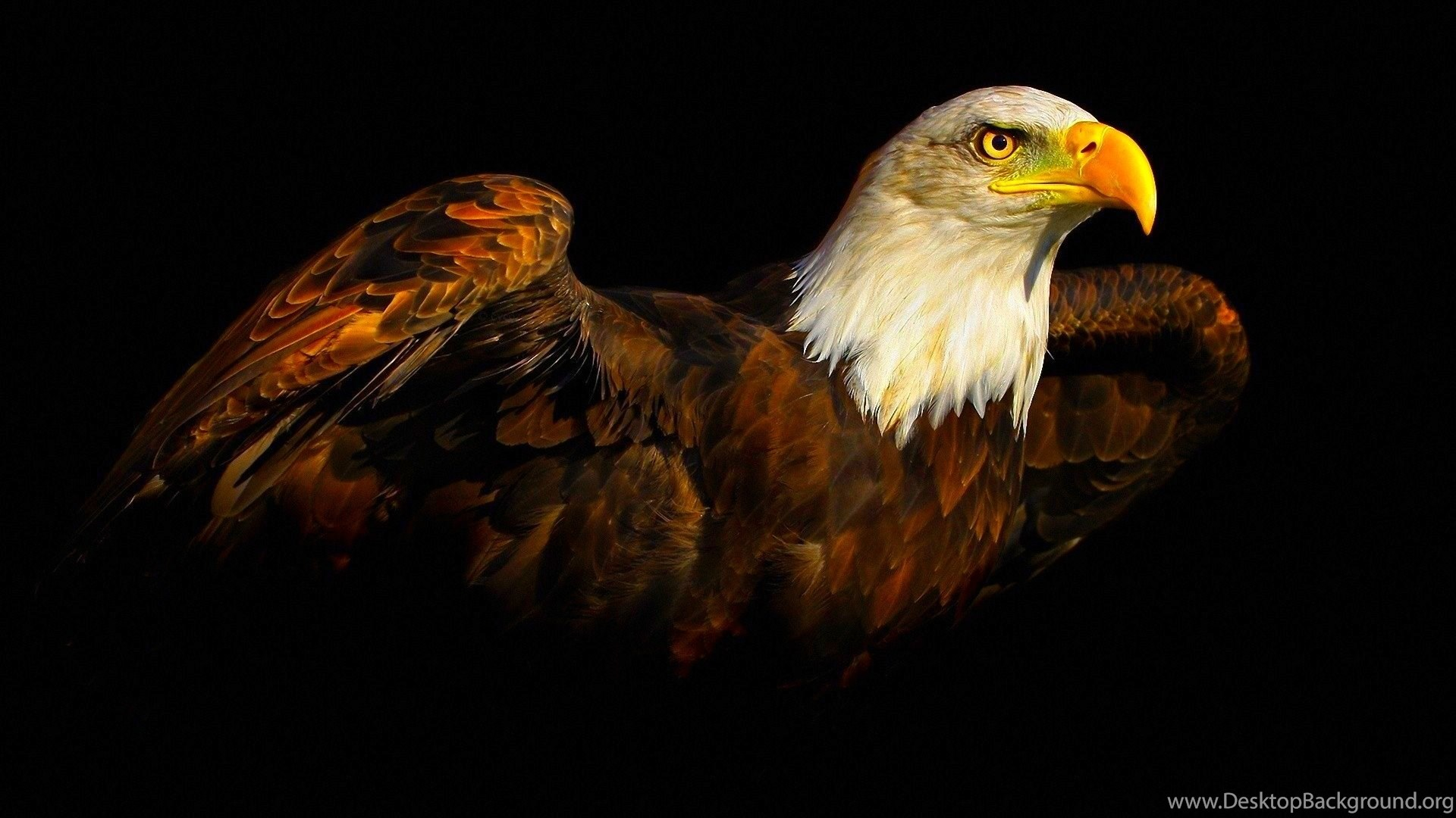 Desktop American Flag Eagle Pictures Free Wallpapers Desktop