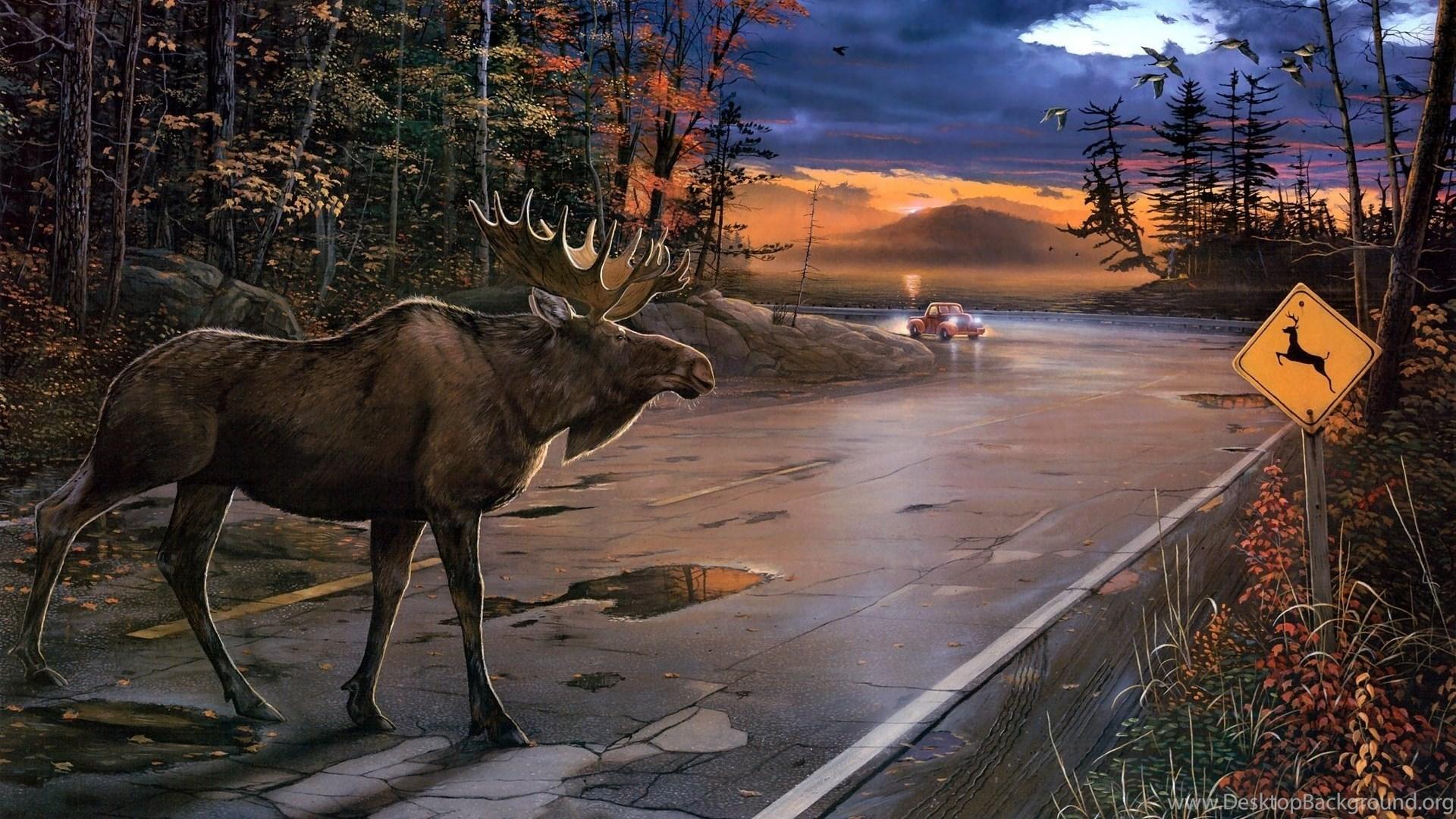 Download Alaska Moose Wallpapers Full Hd Desktop Background