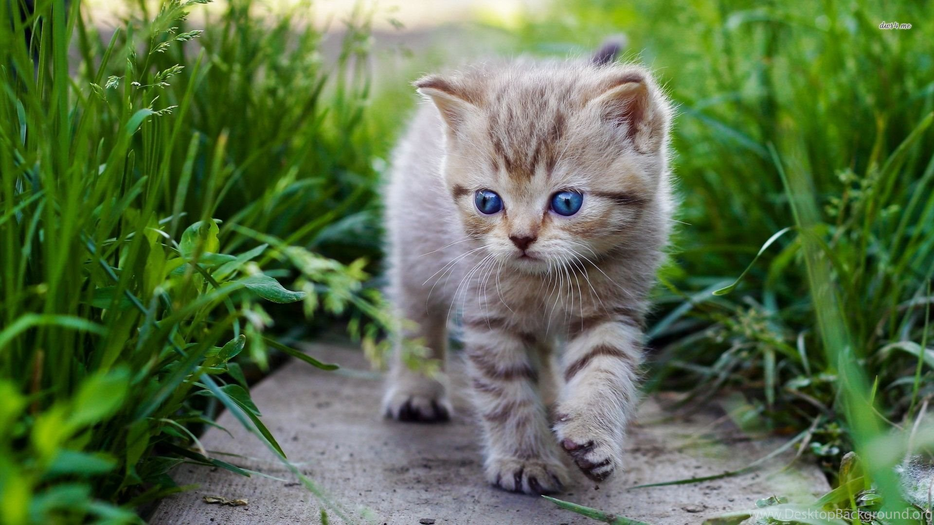 High Resolution Cute Baby Animal Kitty Cat Wallpapers Hd 11 Full