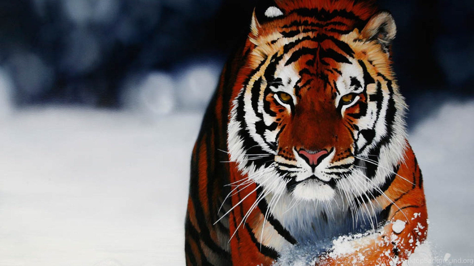 Cool Pictures Of Animals Wallpapers Desktop Background