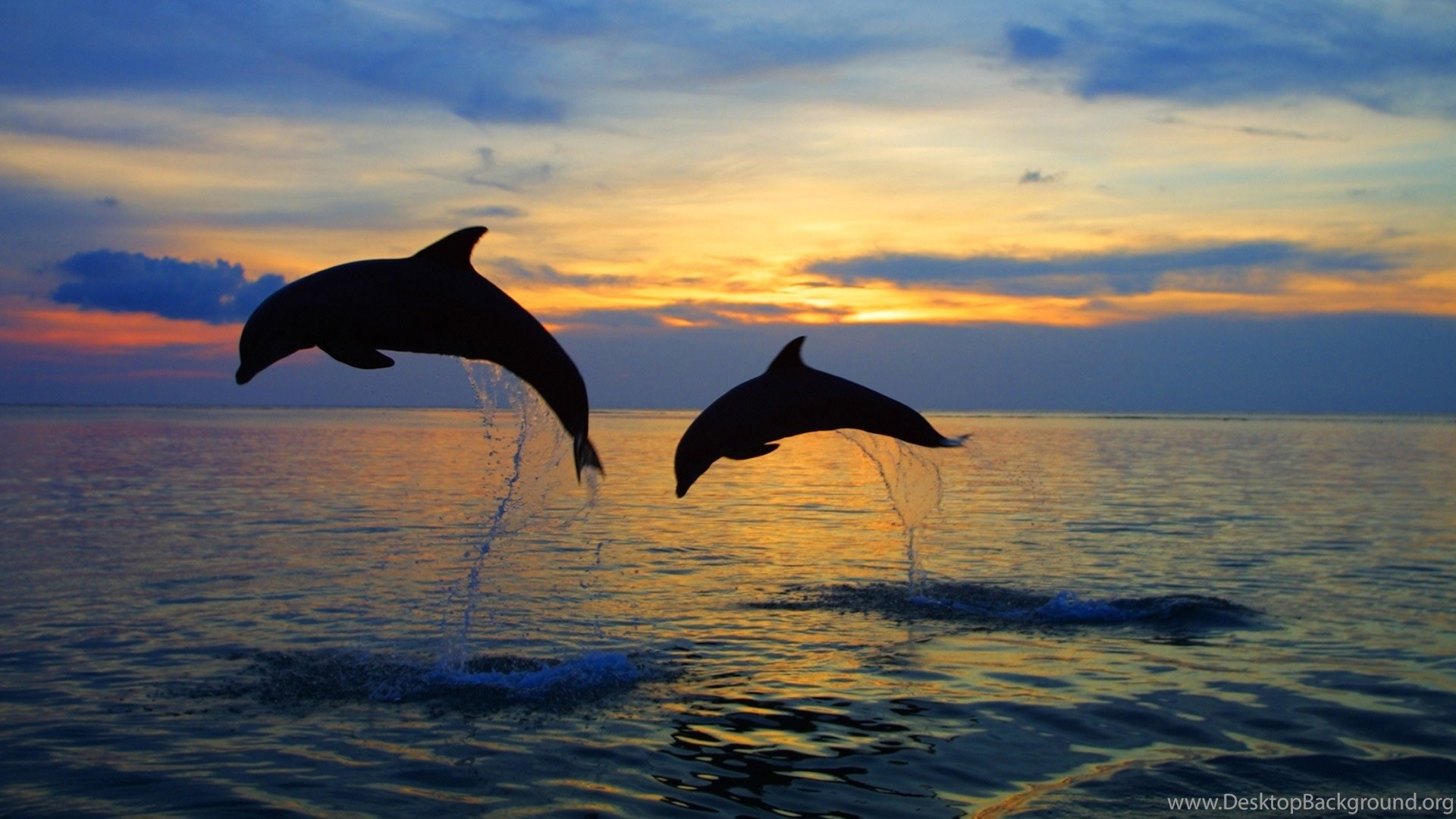 Download Sea Dolphins Wallpapers 2560x1600 Desktop Background