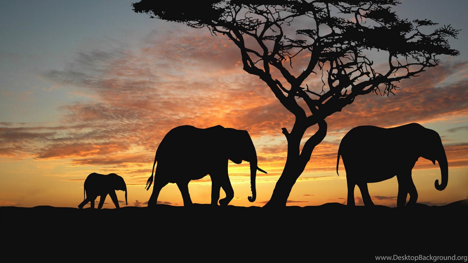Sunset Africa Elephants Nature Animals Wallpapers Evening Africa ...
