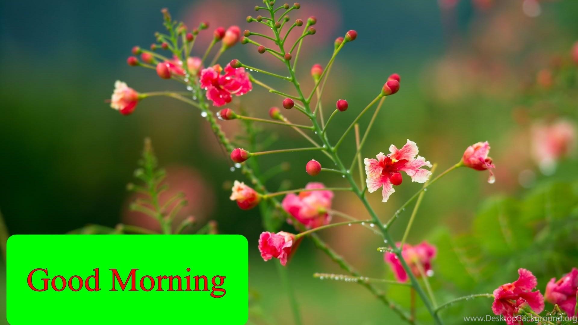 Good Morning Flower Hd Wallpapers Desktop Background