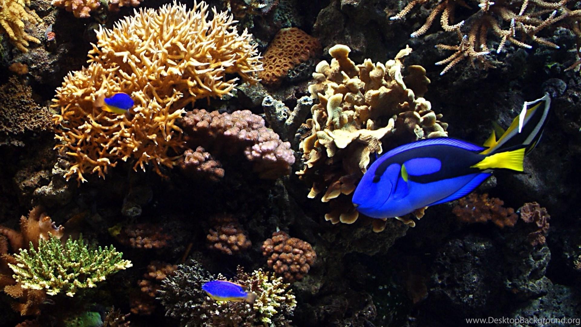 Aquarium Fish Hd Desktop Wallpapers Widescreen High Definition