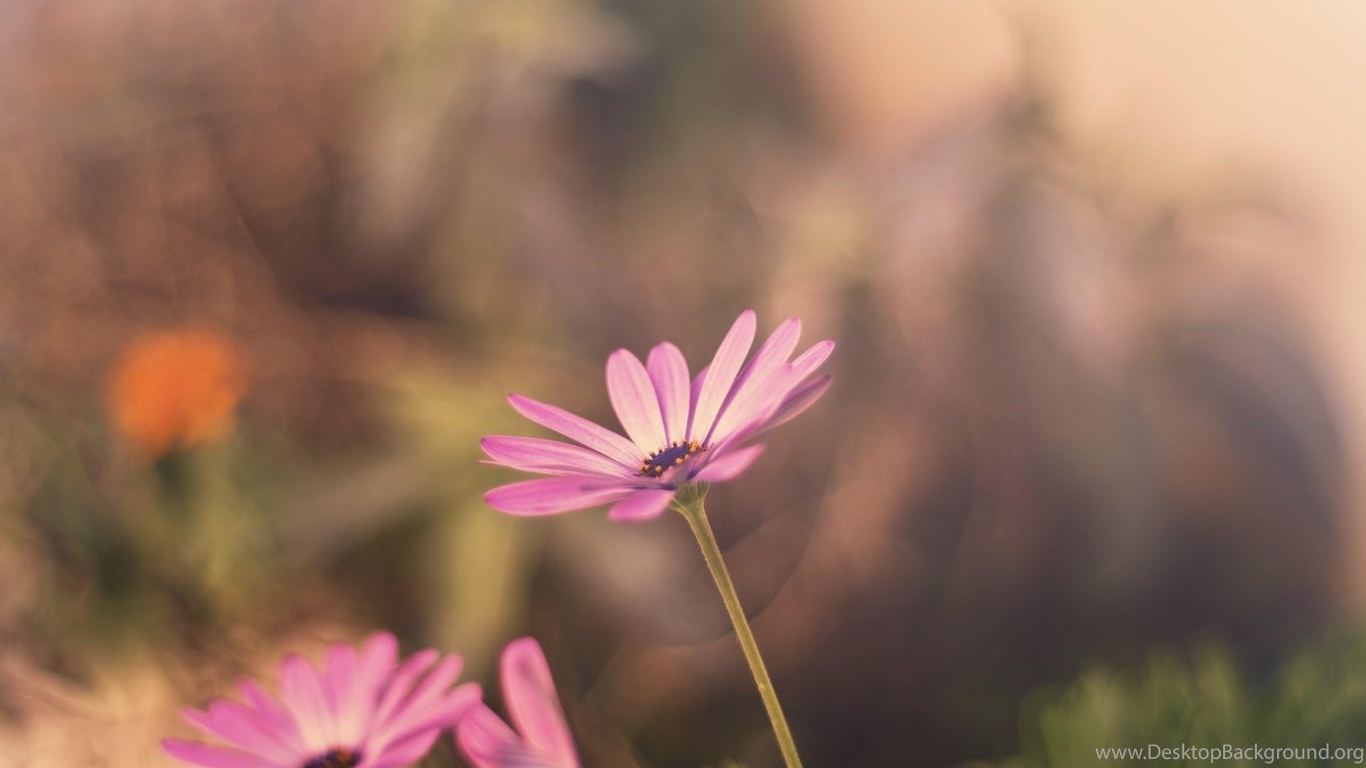 Pastel Flowers Blur Backgrounds Wallpapers Hd Download Desktop