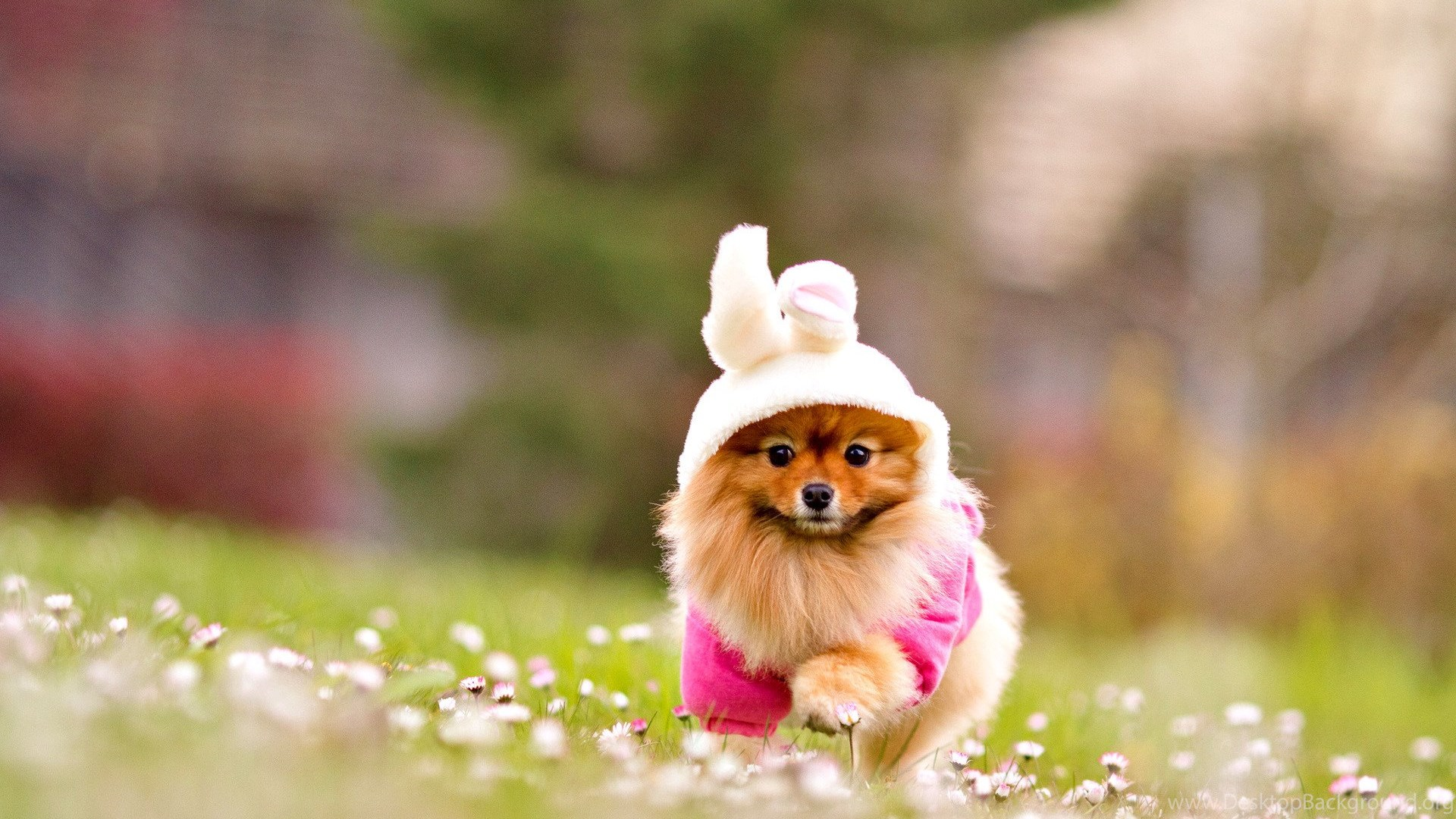 Lovely Dog Wallpapers Download Wallpapers Cute Puppy