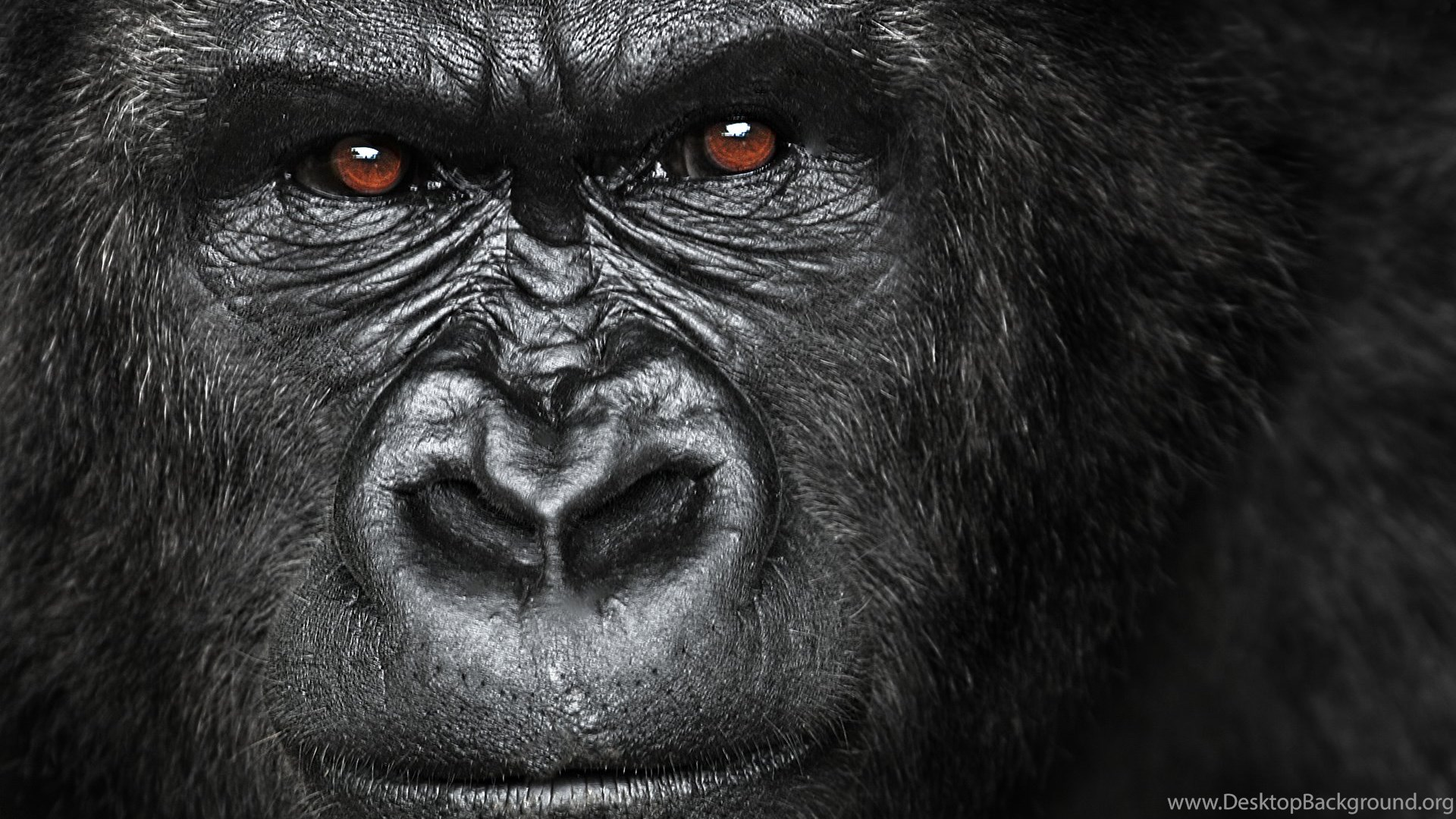 Binary option gorilla