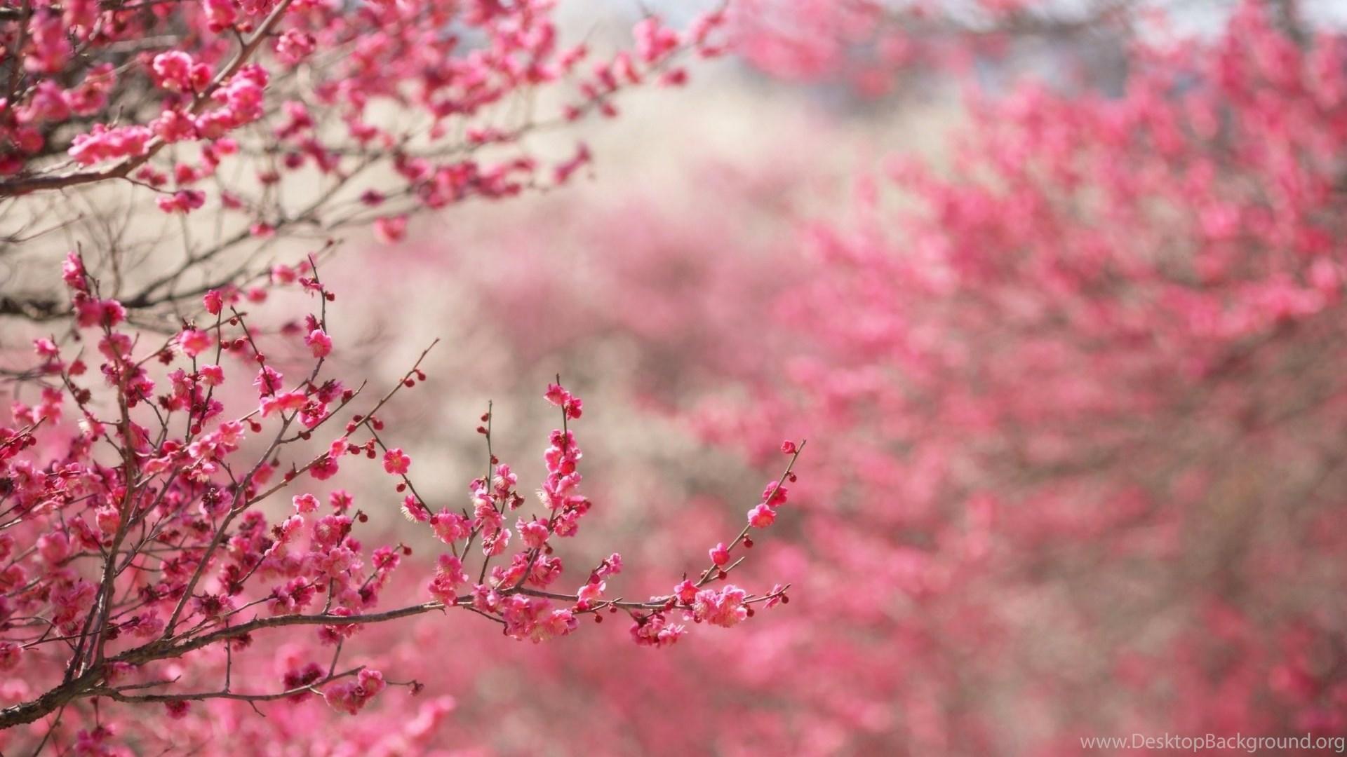Pink Flowers Wallpapers Desktop Background