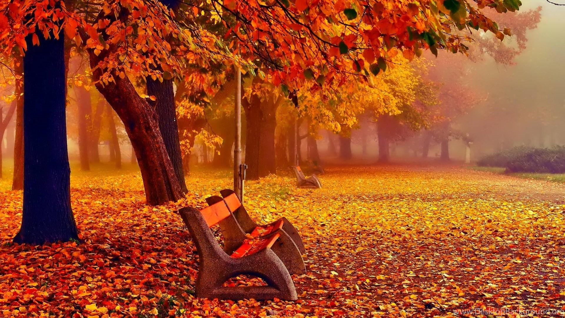 Fall Iphone Wallpaper Hd: Autumn Fall Wallpapers November Desktop Background