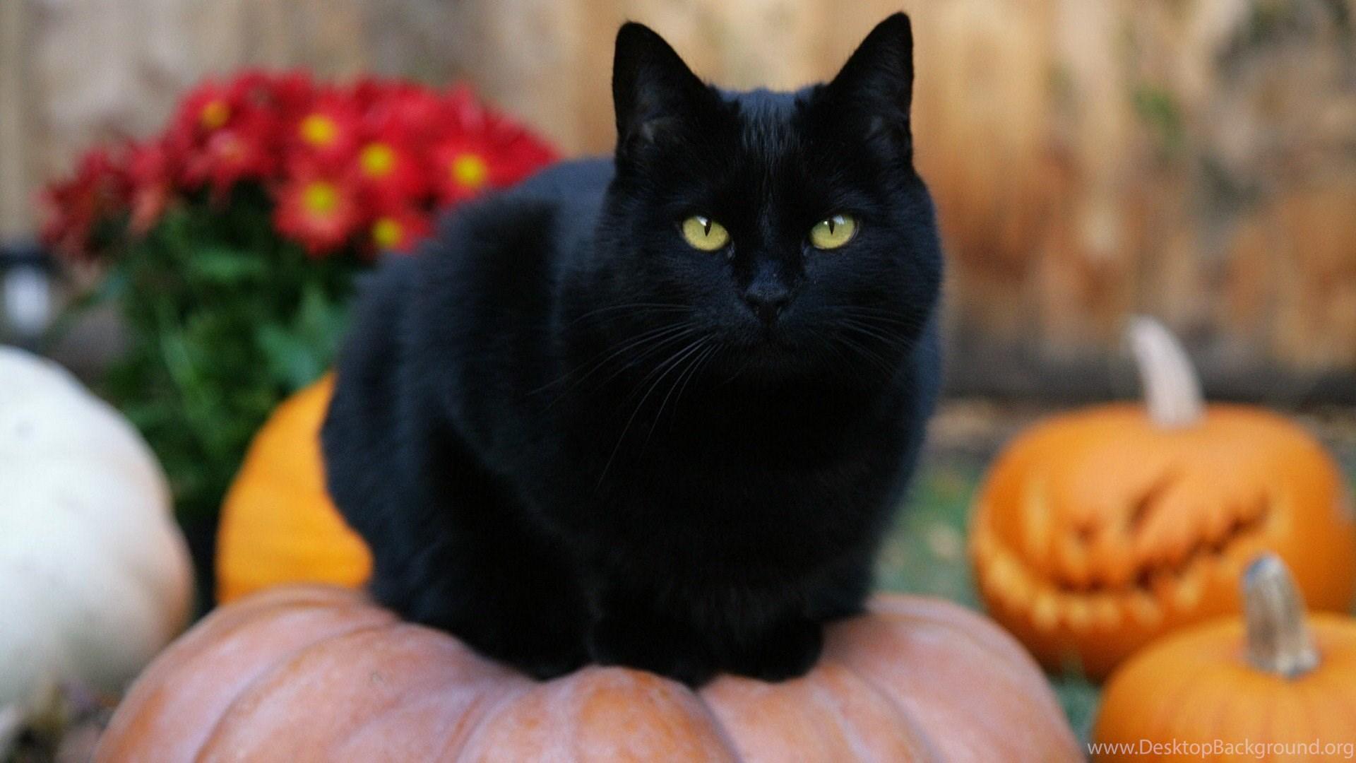 963405 black cat halloween pumpkins jack o lanterns