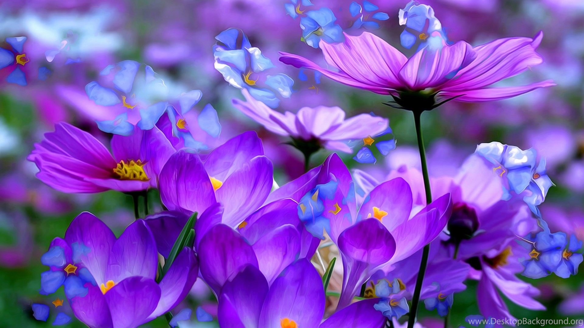 purple flowers blooming hd wallpapers for desktop & mobile desktop