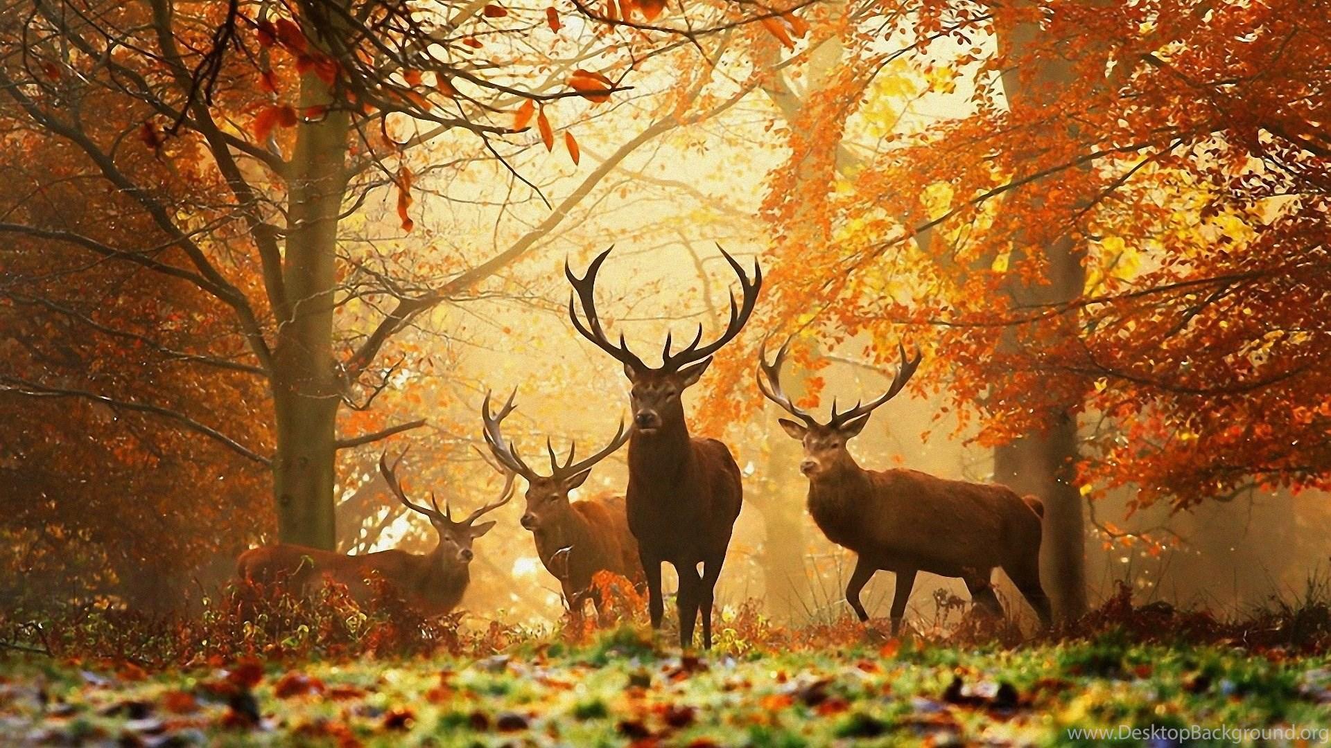 Autumn Hd Desktop Wallpapers Desktop Background