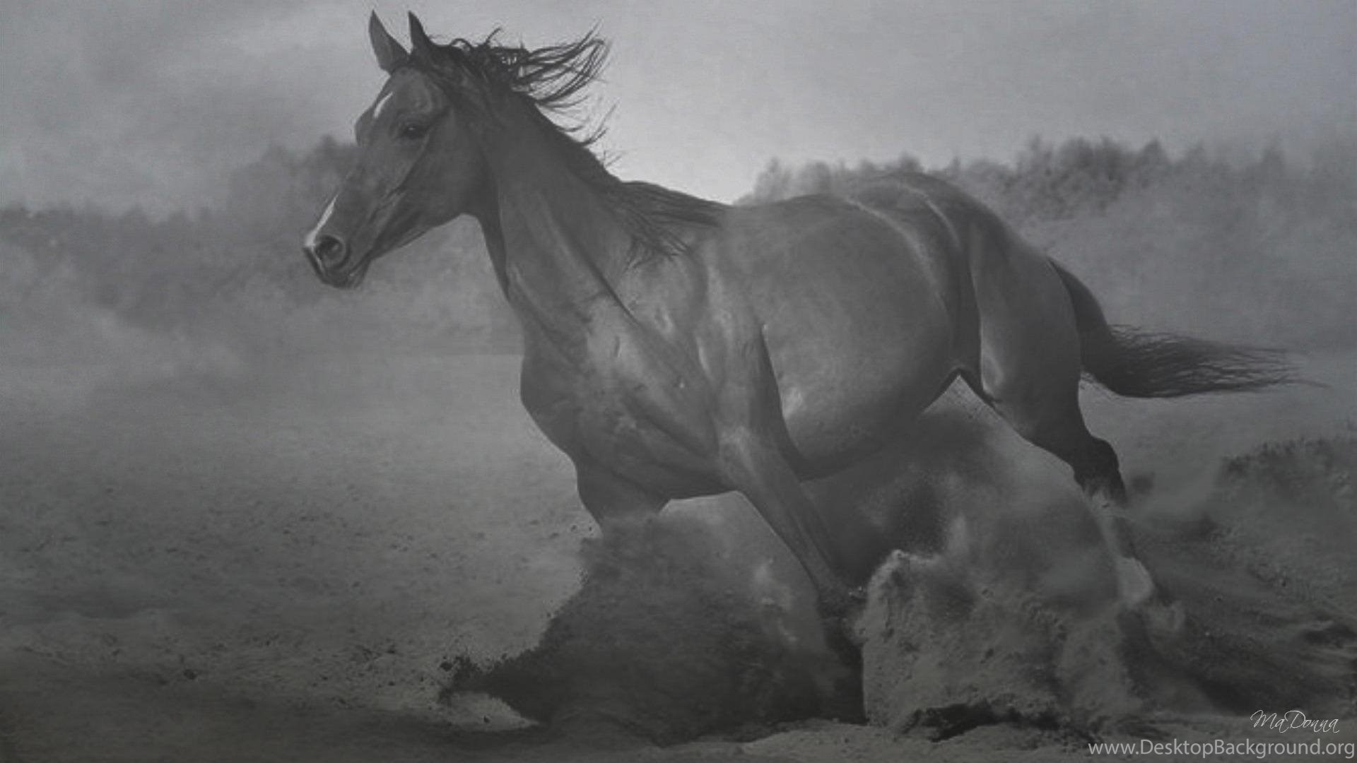 Black And White Horse Wallpapers Hd Wallpapers And Pictures