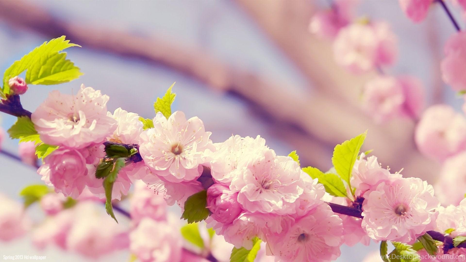 Spring Flowers Desktop Backgrounds Widescreen Pictures Www