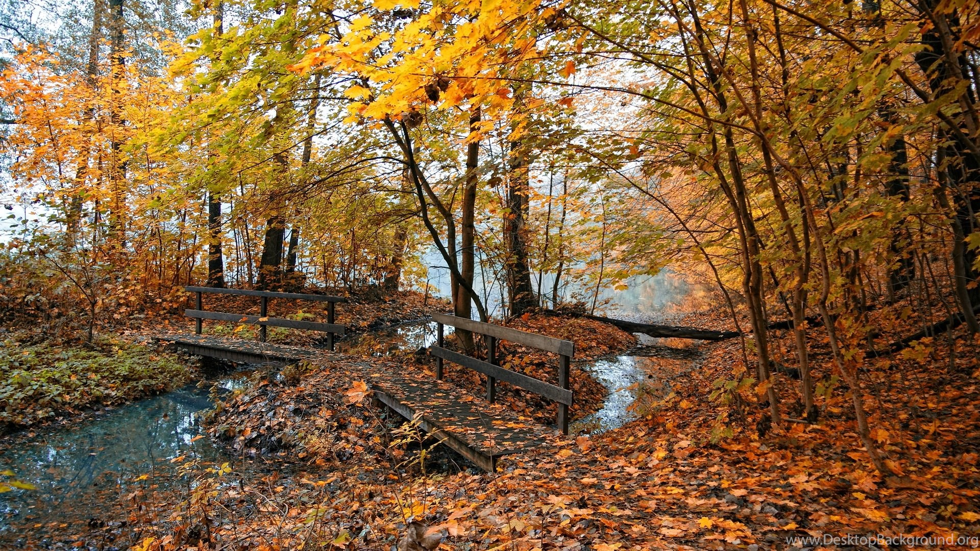 Full HD 1080p Autumn Wallpapers HD, Desktop Backgrounds ...