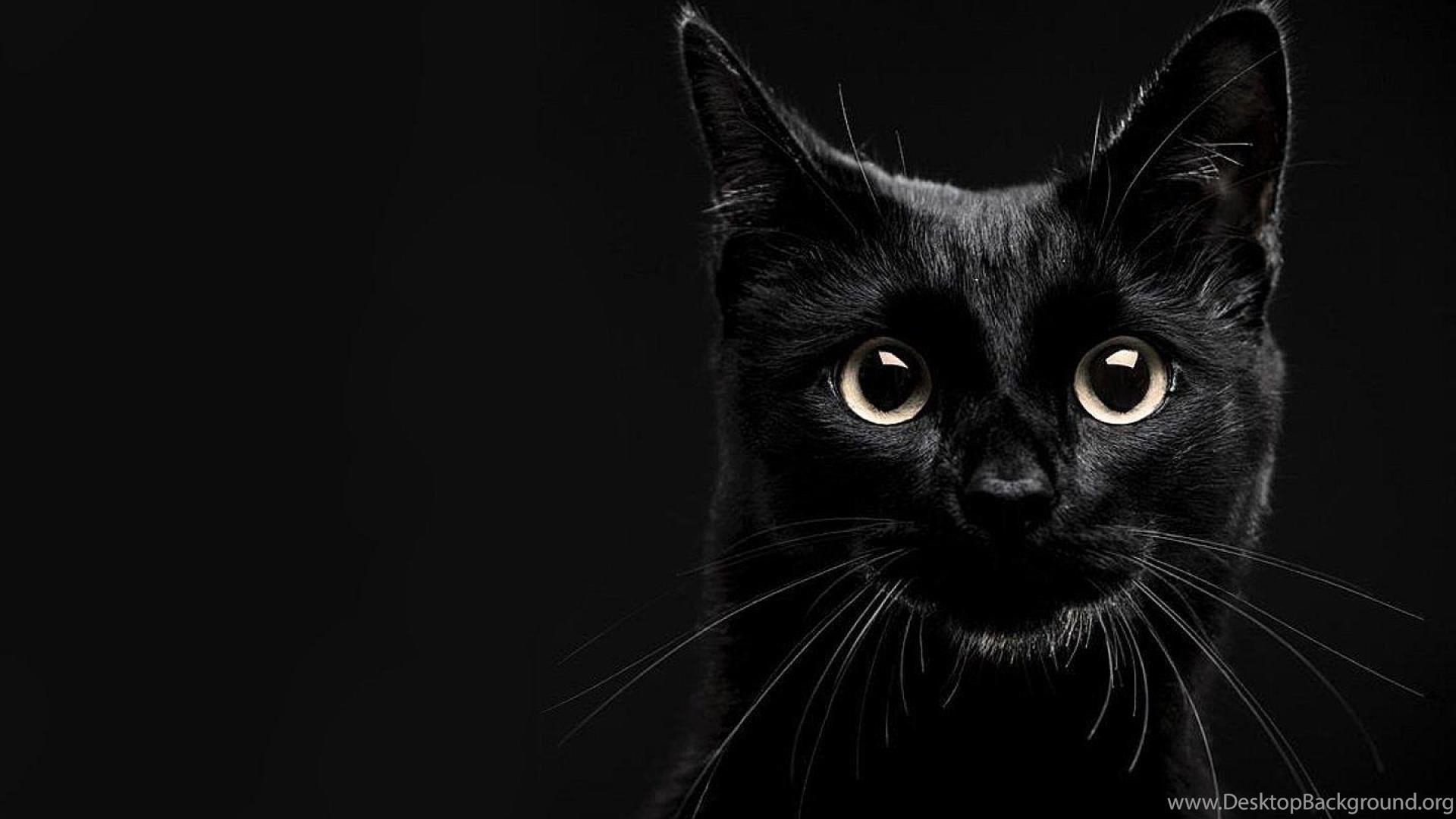 Lucky black cat wallpapers desktop background - Free wallpaper of kittens ...