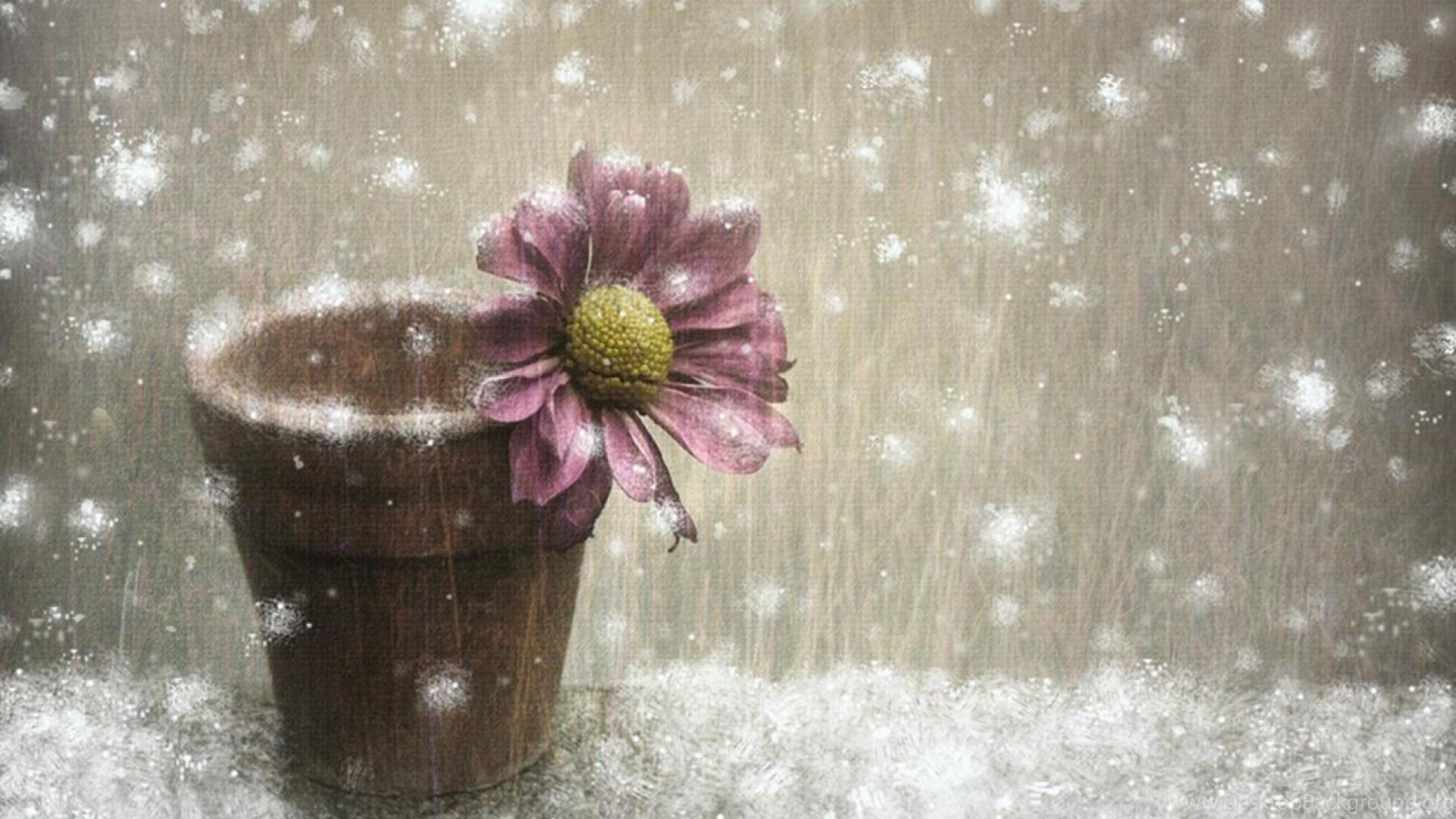 winter flower wallpapers ( desktop background
