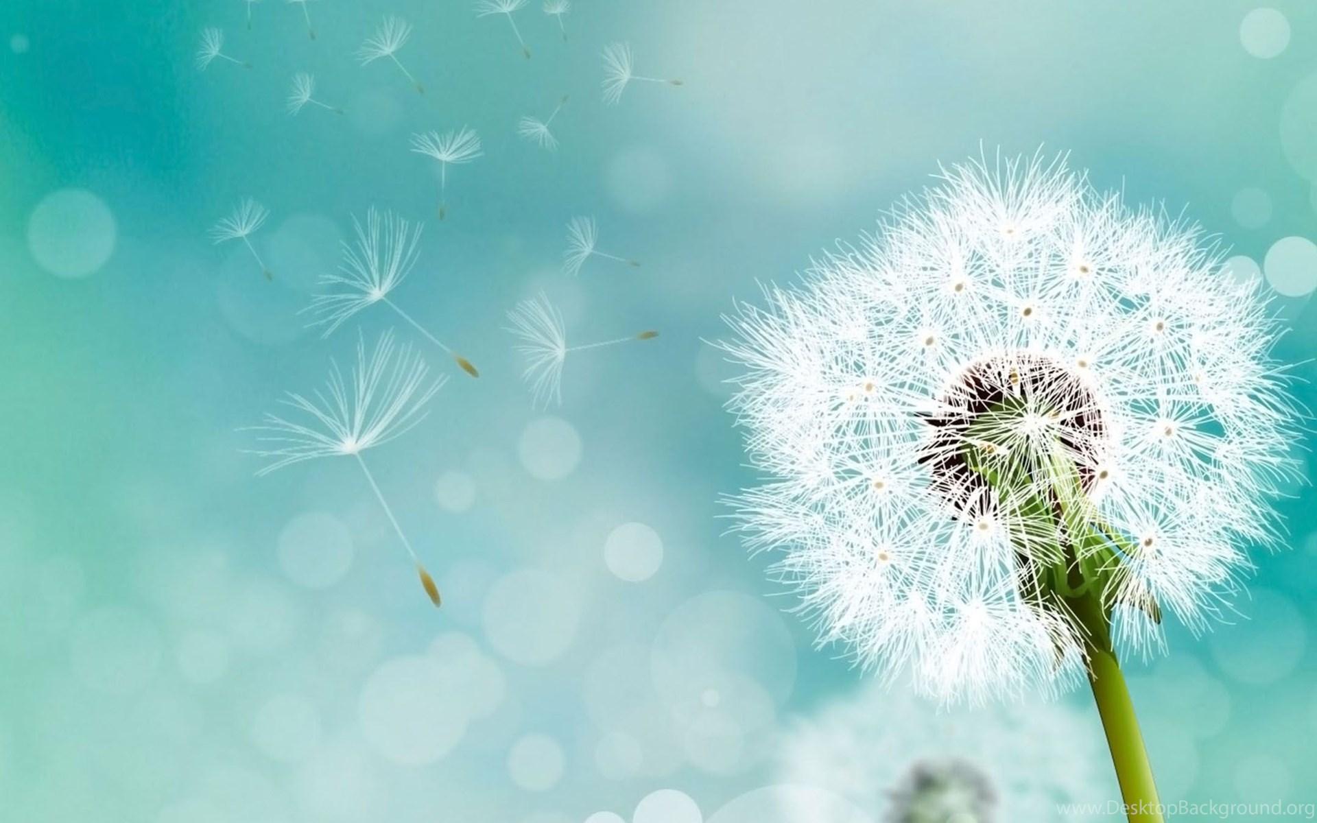 2160x1920 Wallpaper Appsapk 468: Dandelion Backgrounds 2160x1920 Samsung Galaxy S4