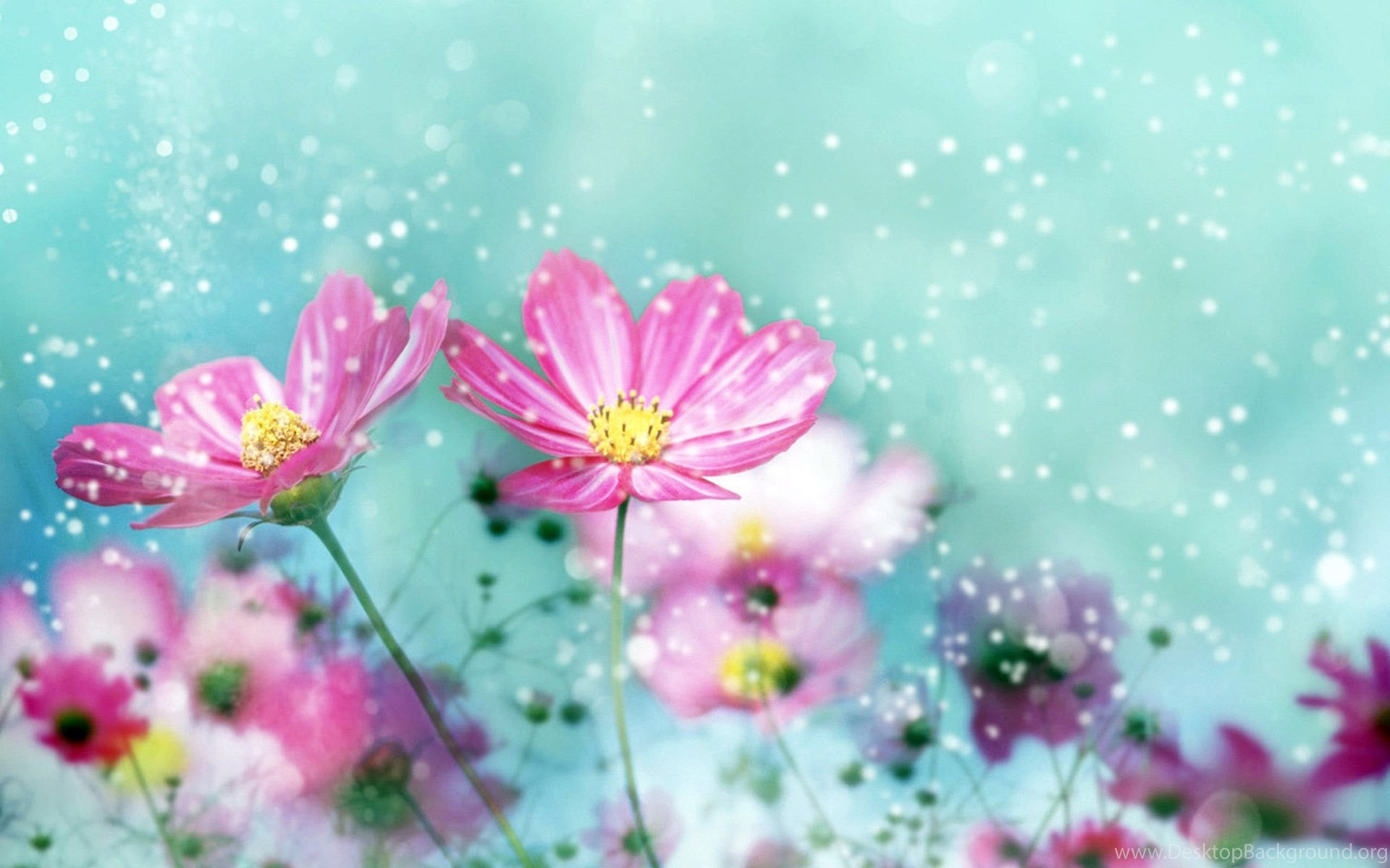 Pretty flower backgrounds hd wallpapers desktop wallpapers widescreen mightylinksfo