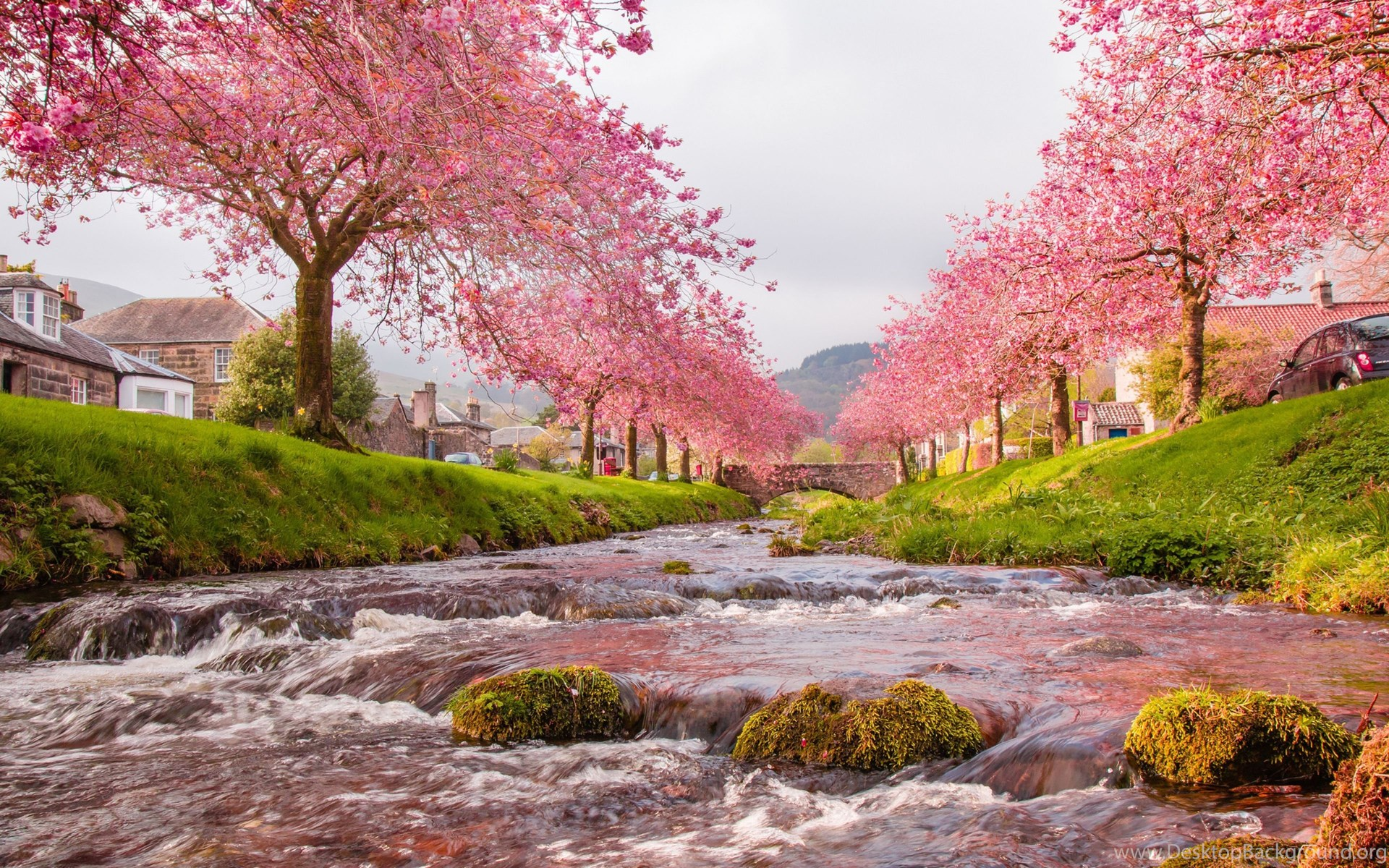 Download japan sakura wallpapers for android desktop - Sakura desktop ...