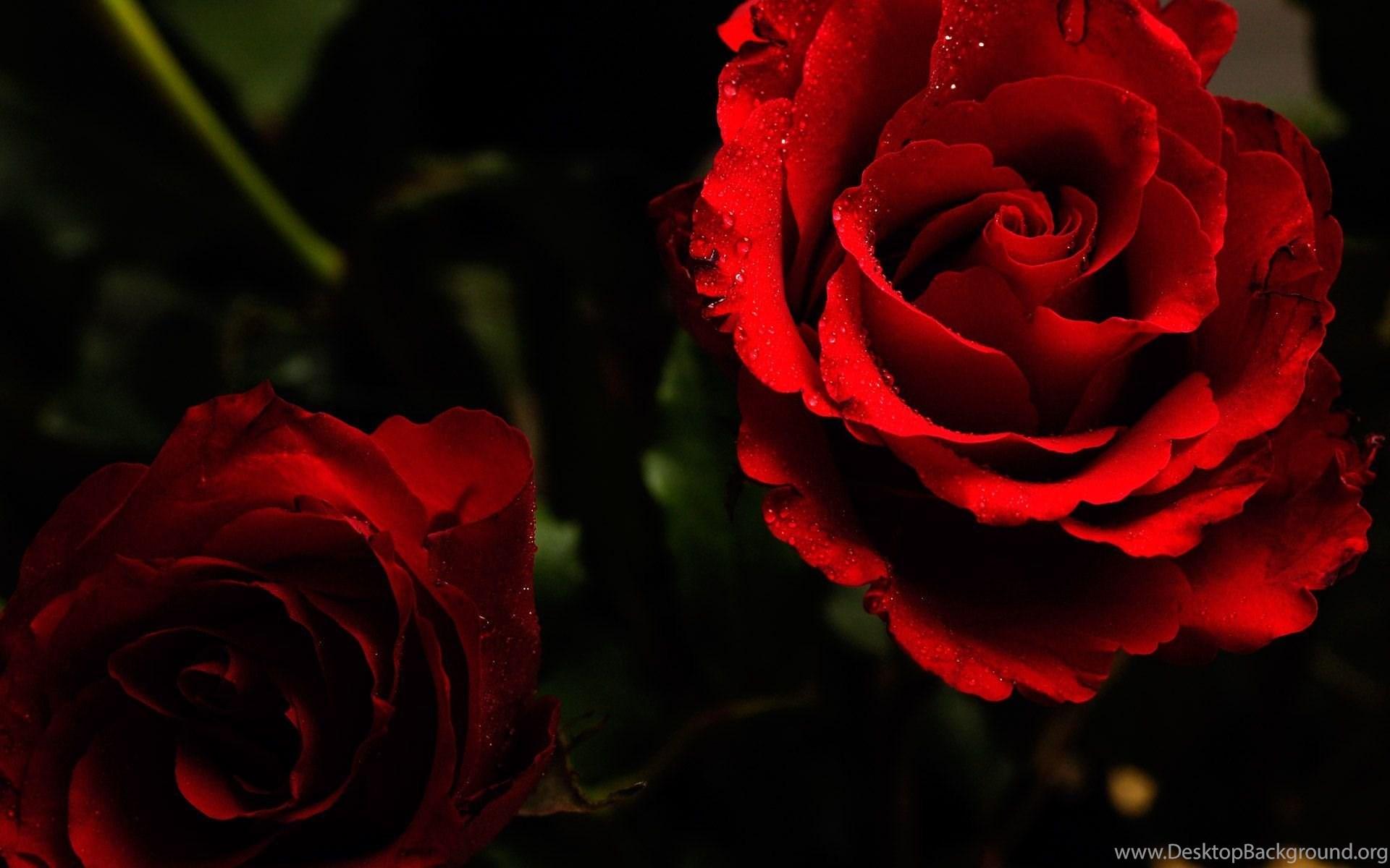 Gallery For Dark Red Rose Wallpapers Desktop Desktop ...