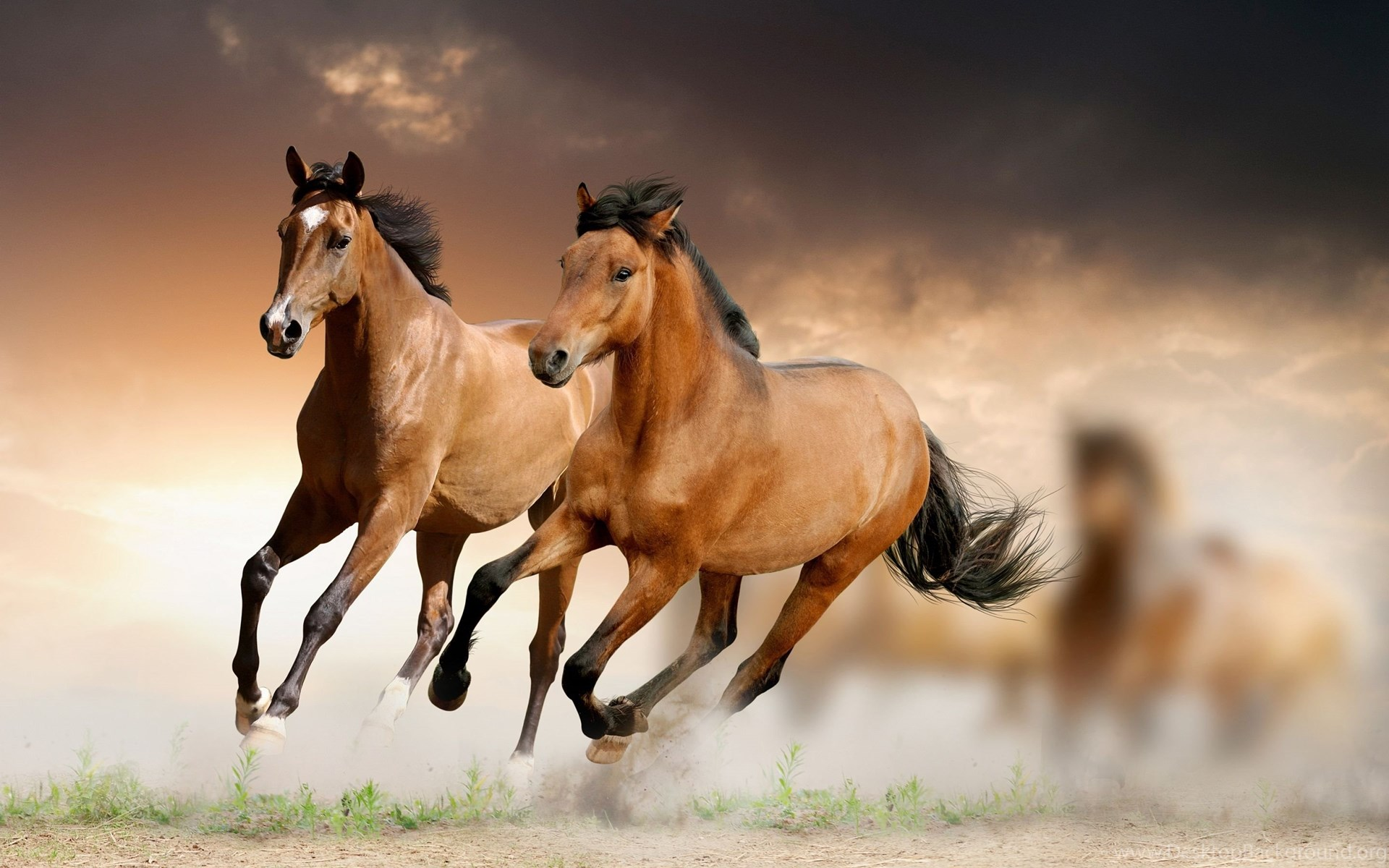 best horse wallpapers desktop background