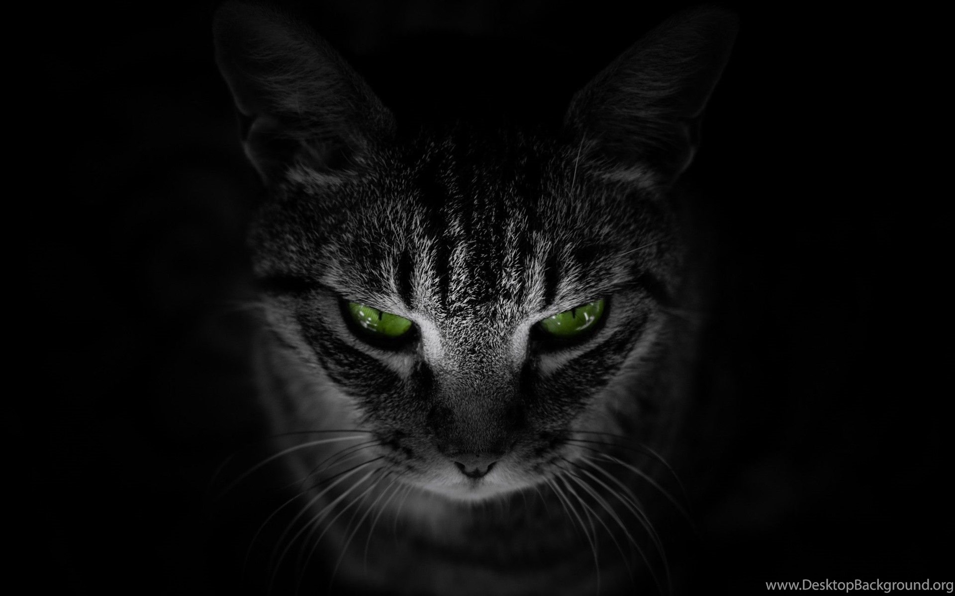 Cat, Animals, Black Background, Green Eyes Wallpapers HD ...
