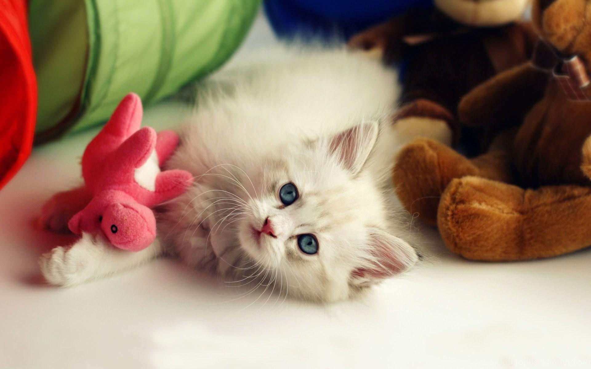 Hd Wallpaper Cute Baby Cat Cute Cat Wallpapers Desktop Background