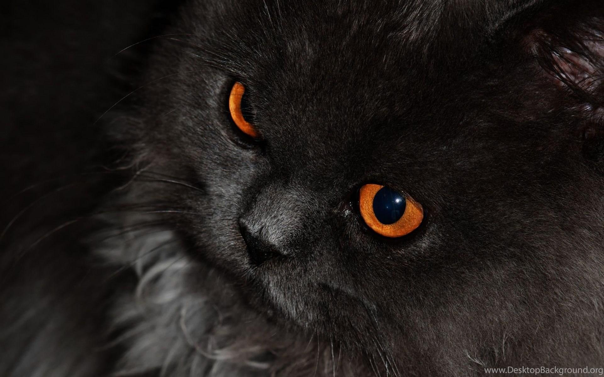 Black Cat With Orange Eyes Hd Wallpapers Windows 10 Wallpapers